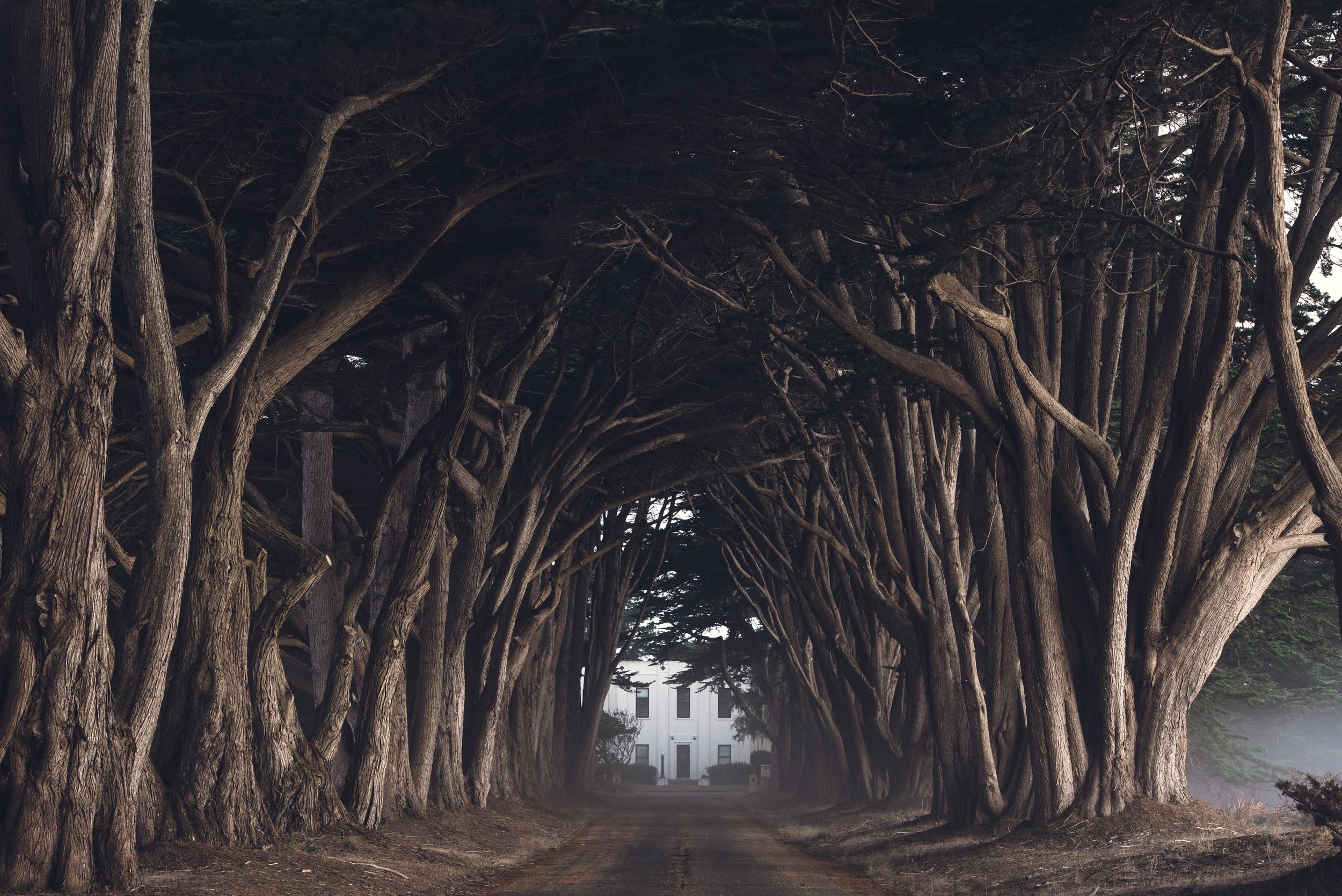 Cypress Grove-7034.jpg