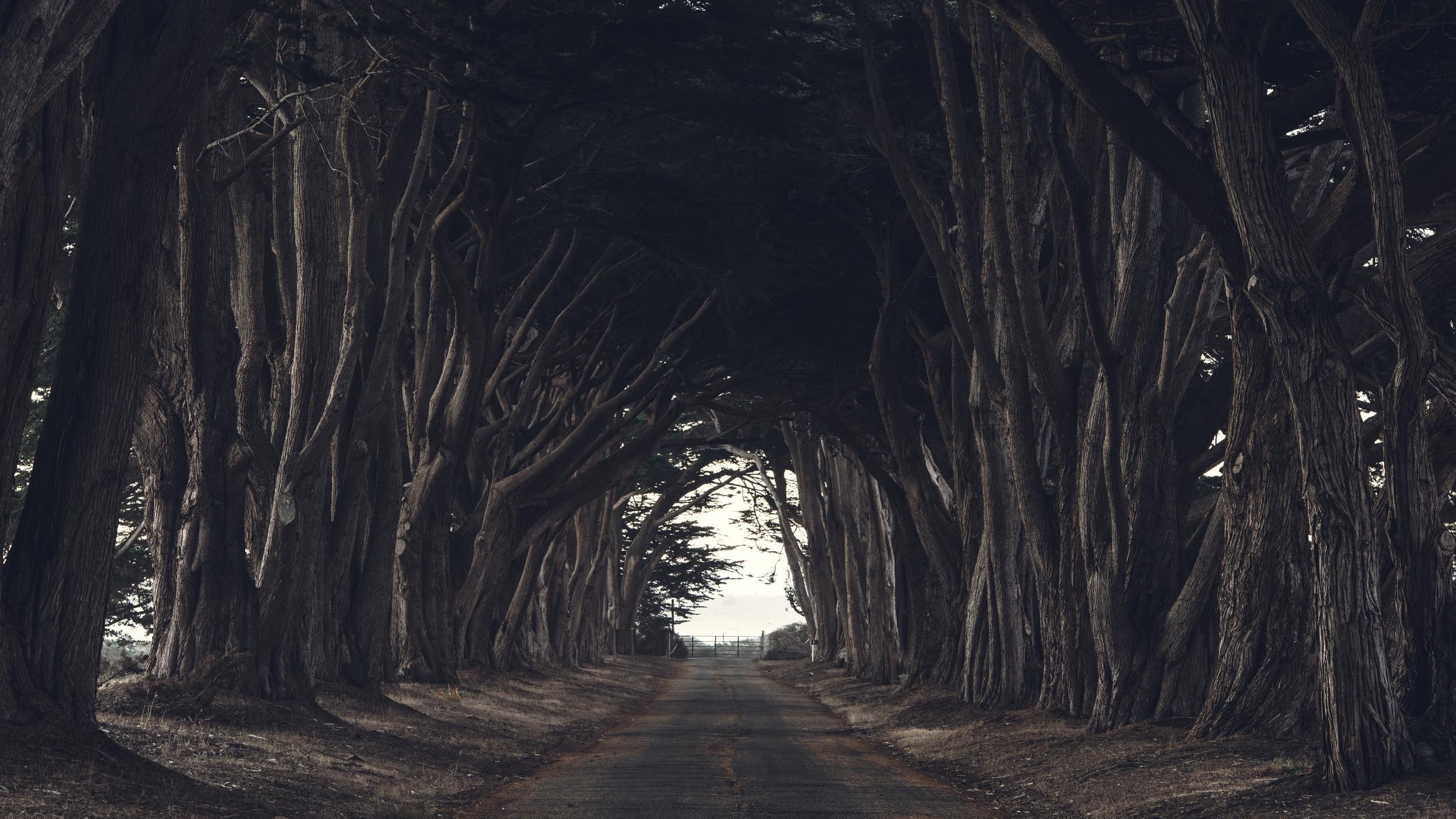 Cypress Grove-7055.jpg