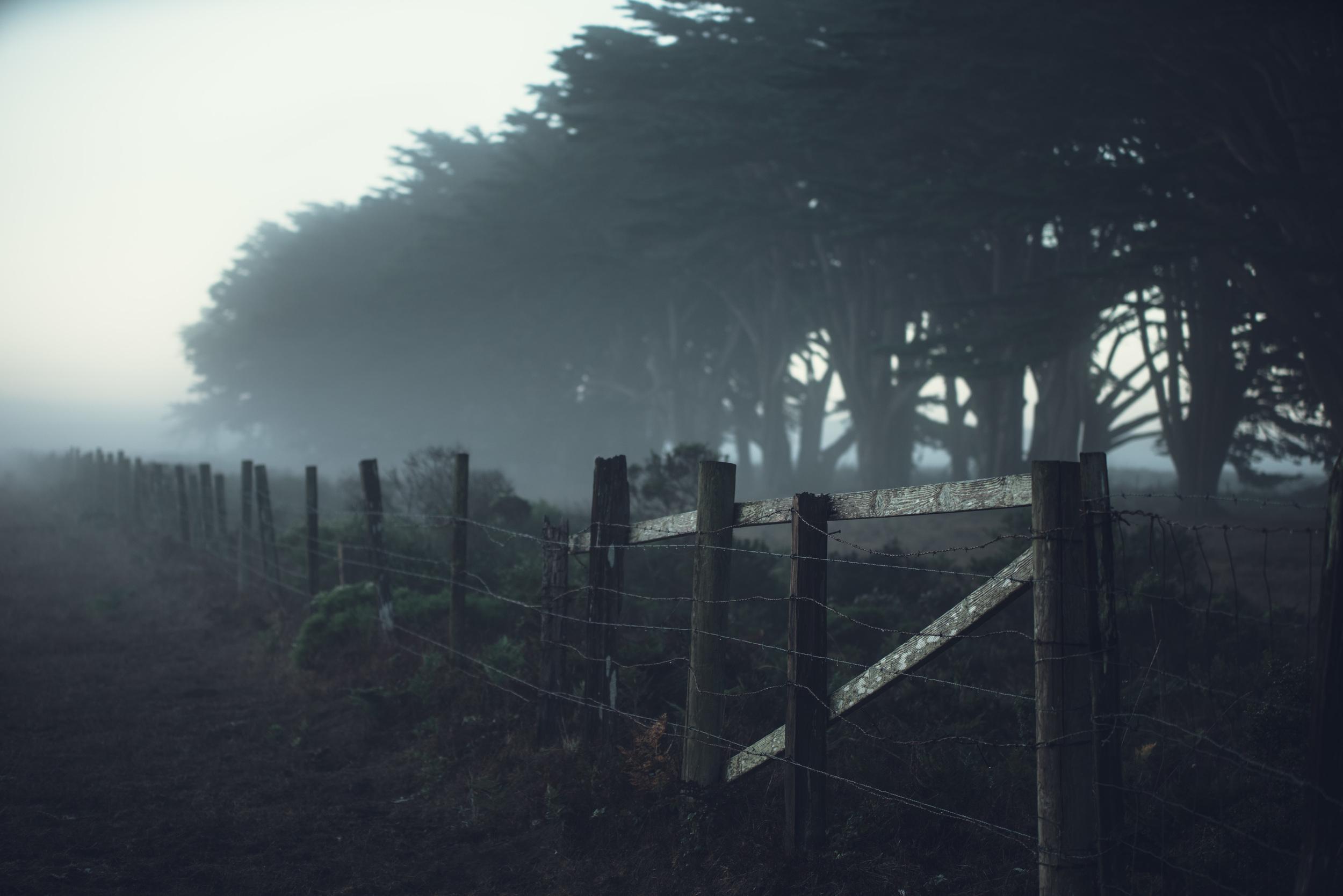 Cypress Grove-7078.jpg
