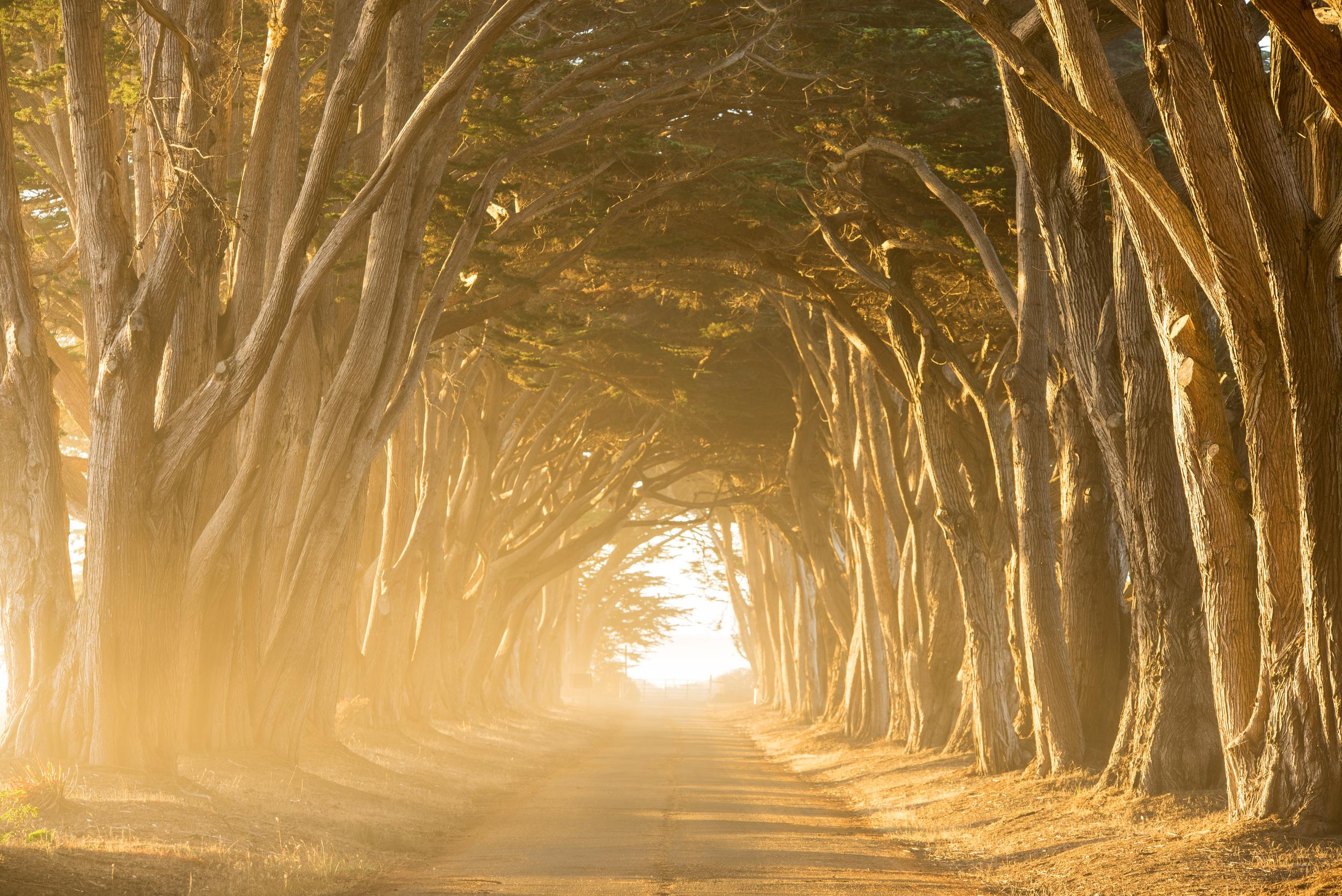 Cypress Grove-7106.jpg