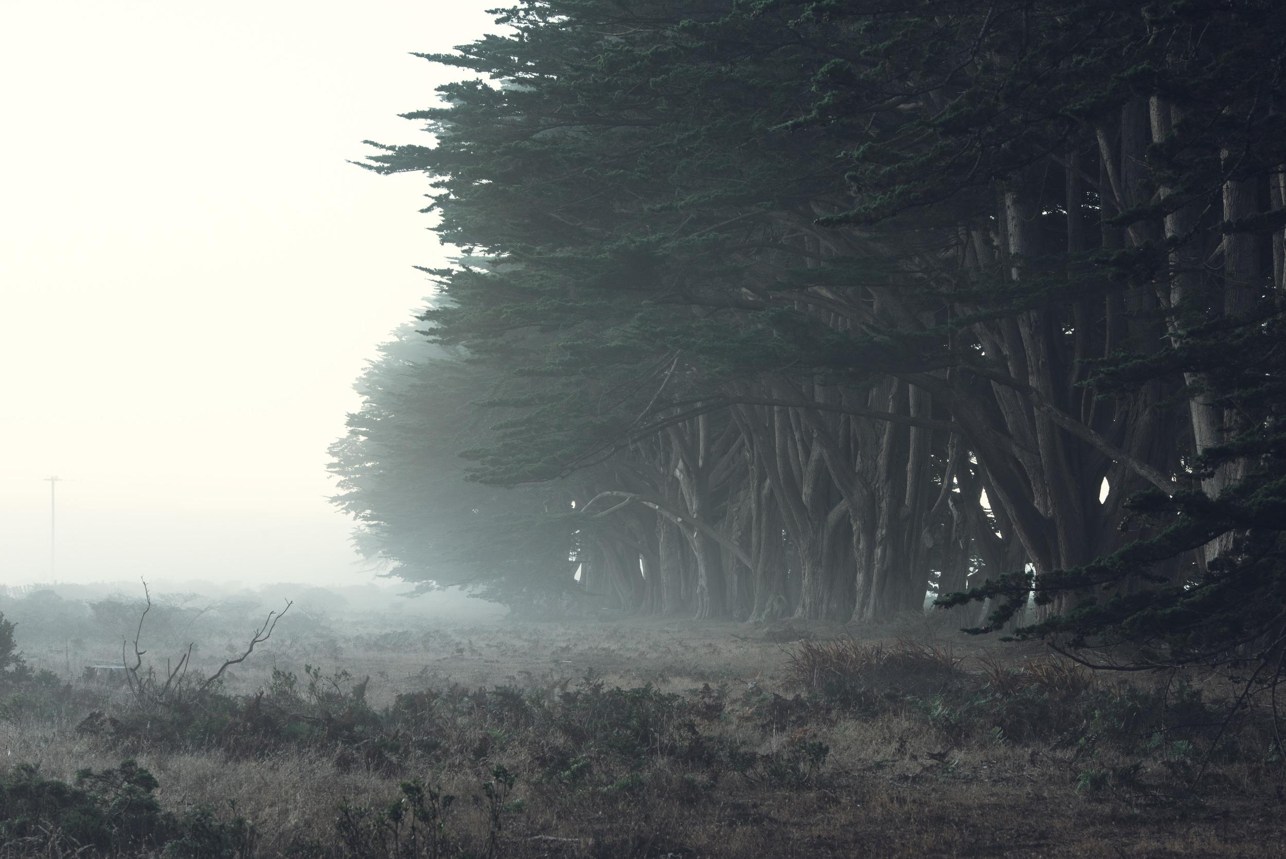 Cypress Grove-7068.jpg