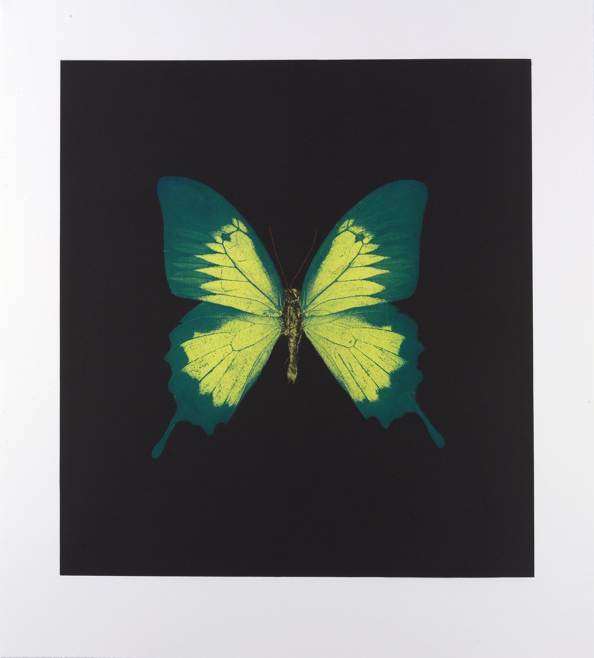 Damien Hirst  Six Butterfly • 2008 Fotogravura Edição: 30 119.6 x 108.4 cm