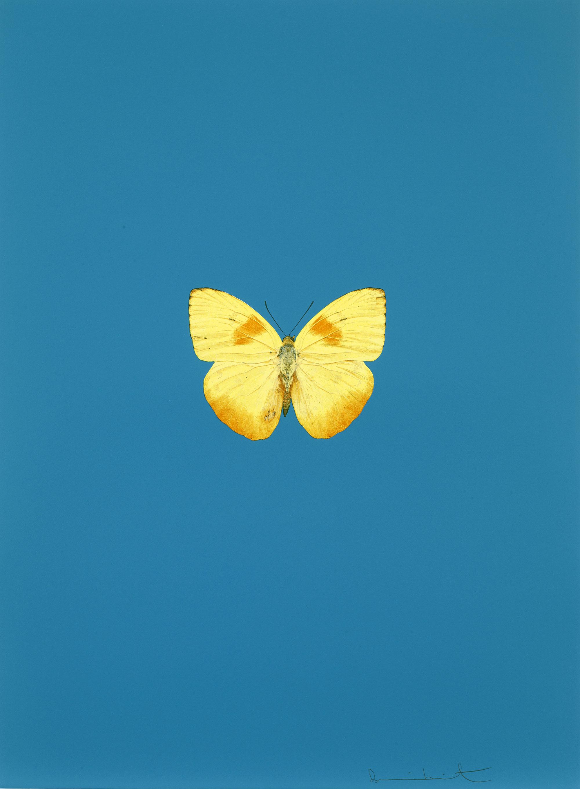 Damien Hirst    It's a Beautiful Day (azul) •2013 Gravura polimerizada Edição: 55 66.5 x 49 cm