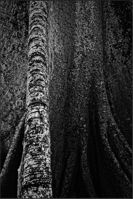 André Paoliello  sem título  2016  impressão sobre papel  110 x 73 cm