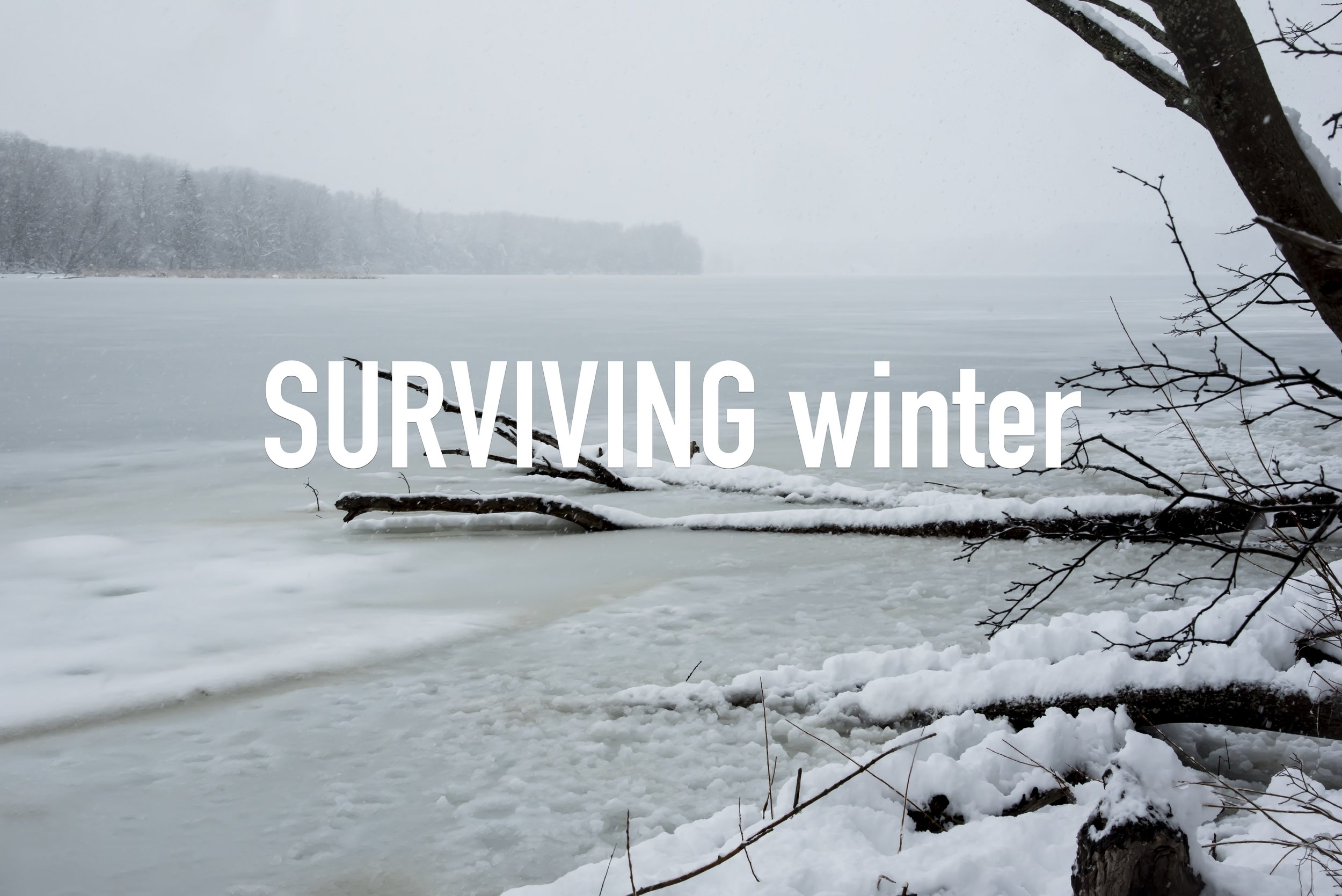Surviving Winter Title slide with words.jpg