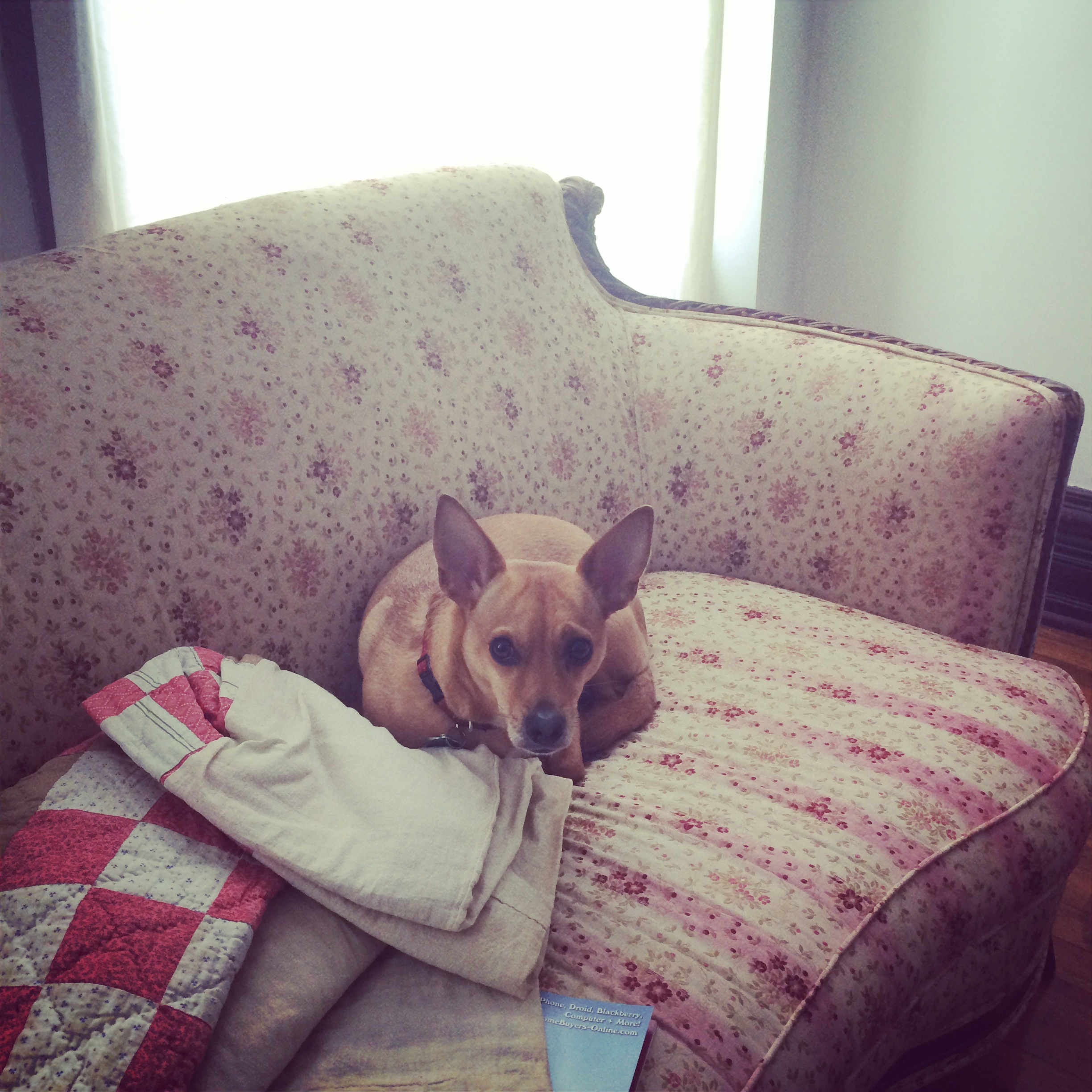 willa enjoyed the vintage sofa...
