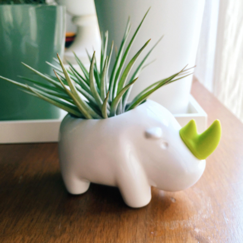 it's like an adorable porcupine-rhino hybrid.