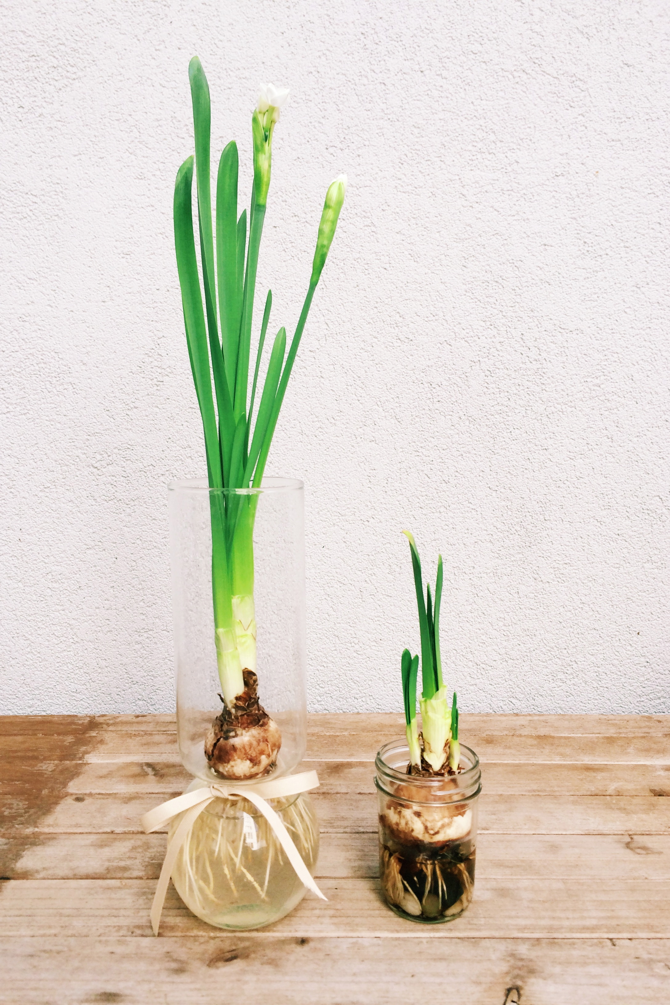 the bulb on the left was started about four weeks ago, and the one on the right just about a week ago.