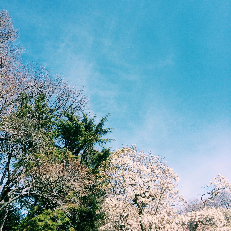 bk-gardens-sky