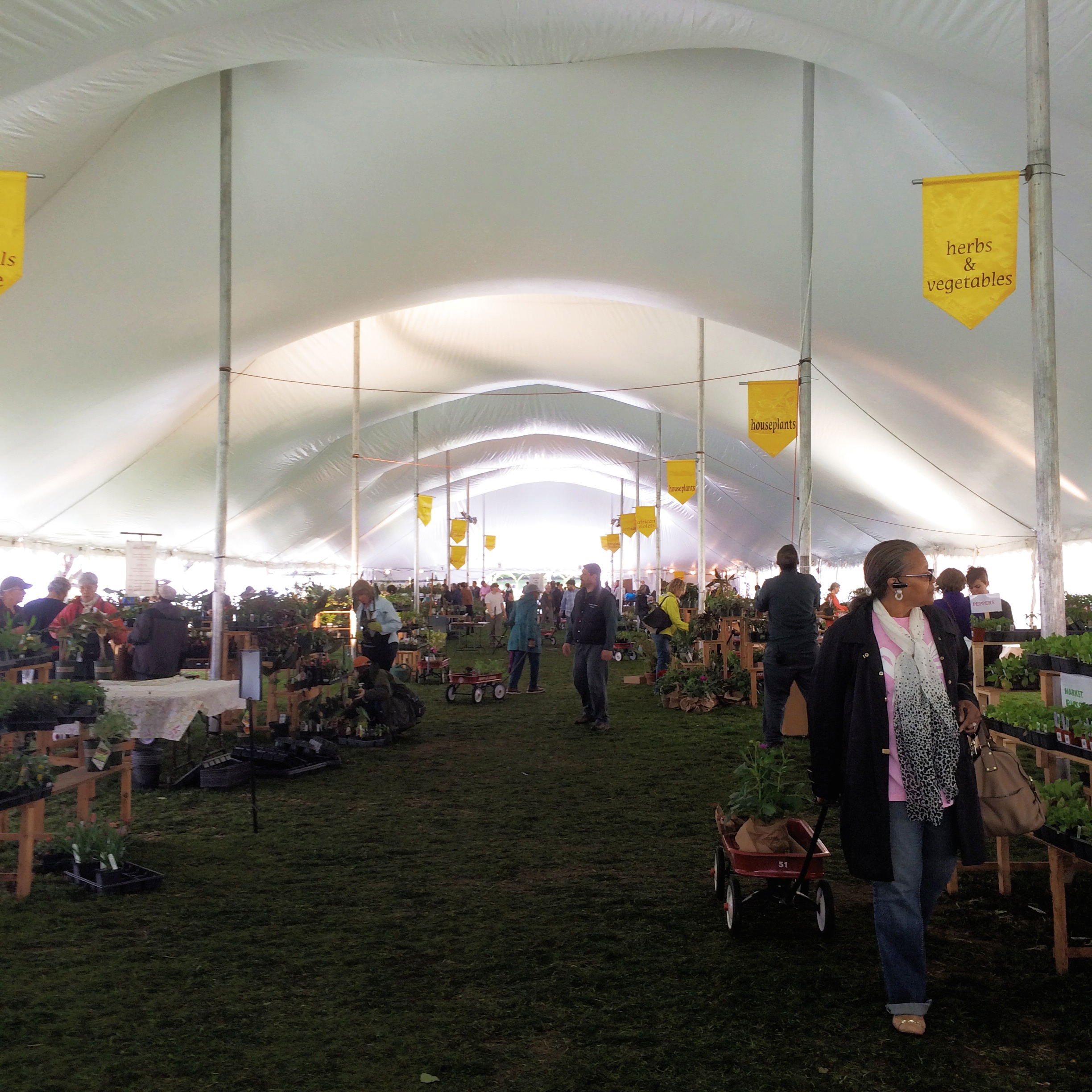 the giant tent, set up on the cherry esplanade.