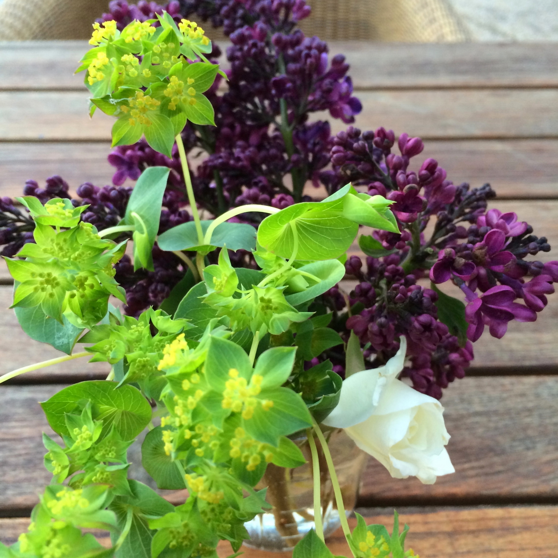 flowers-outside-carneros