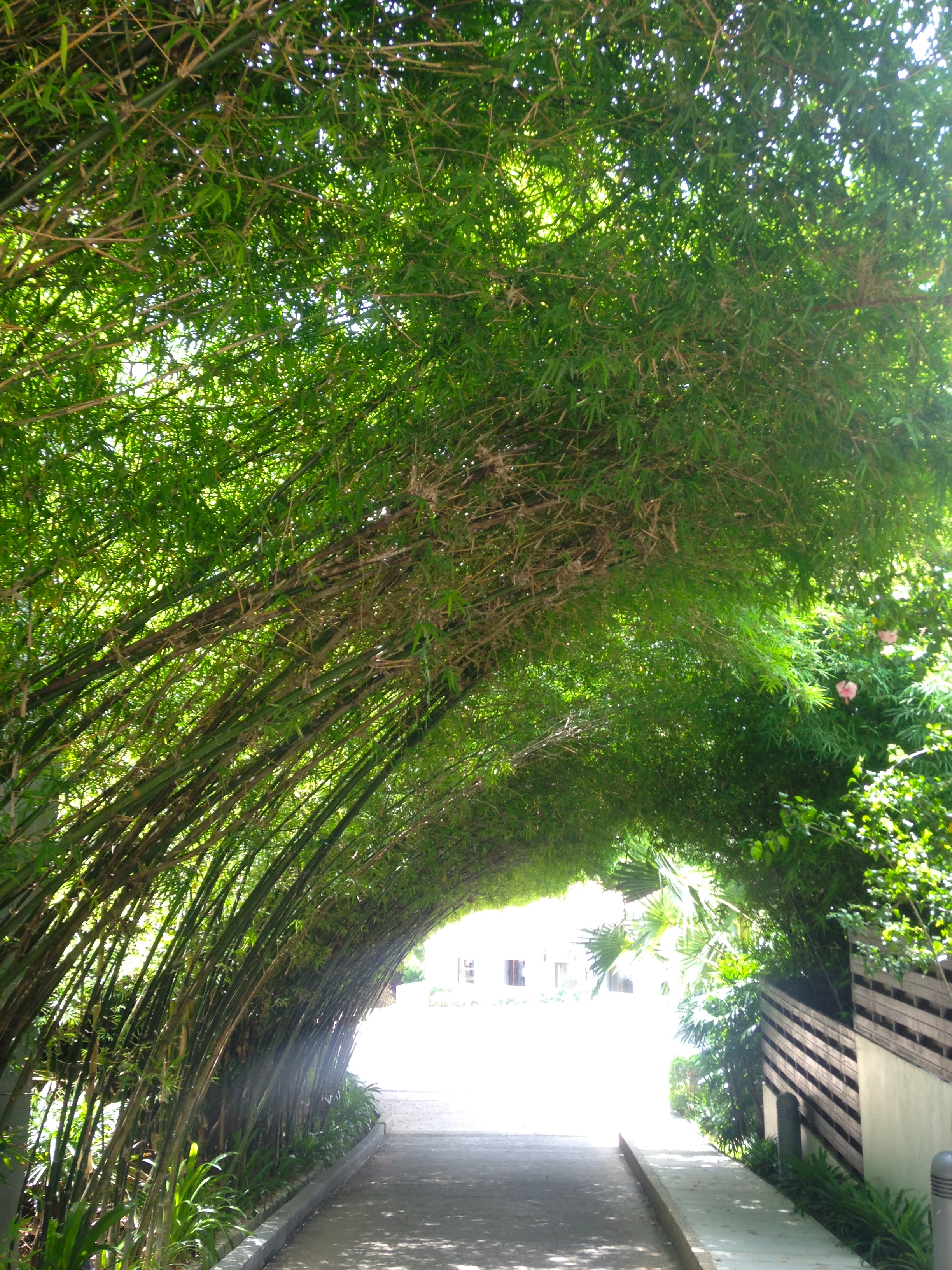 theshore-arched-bamboo