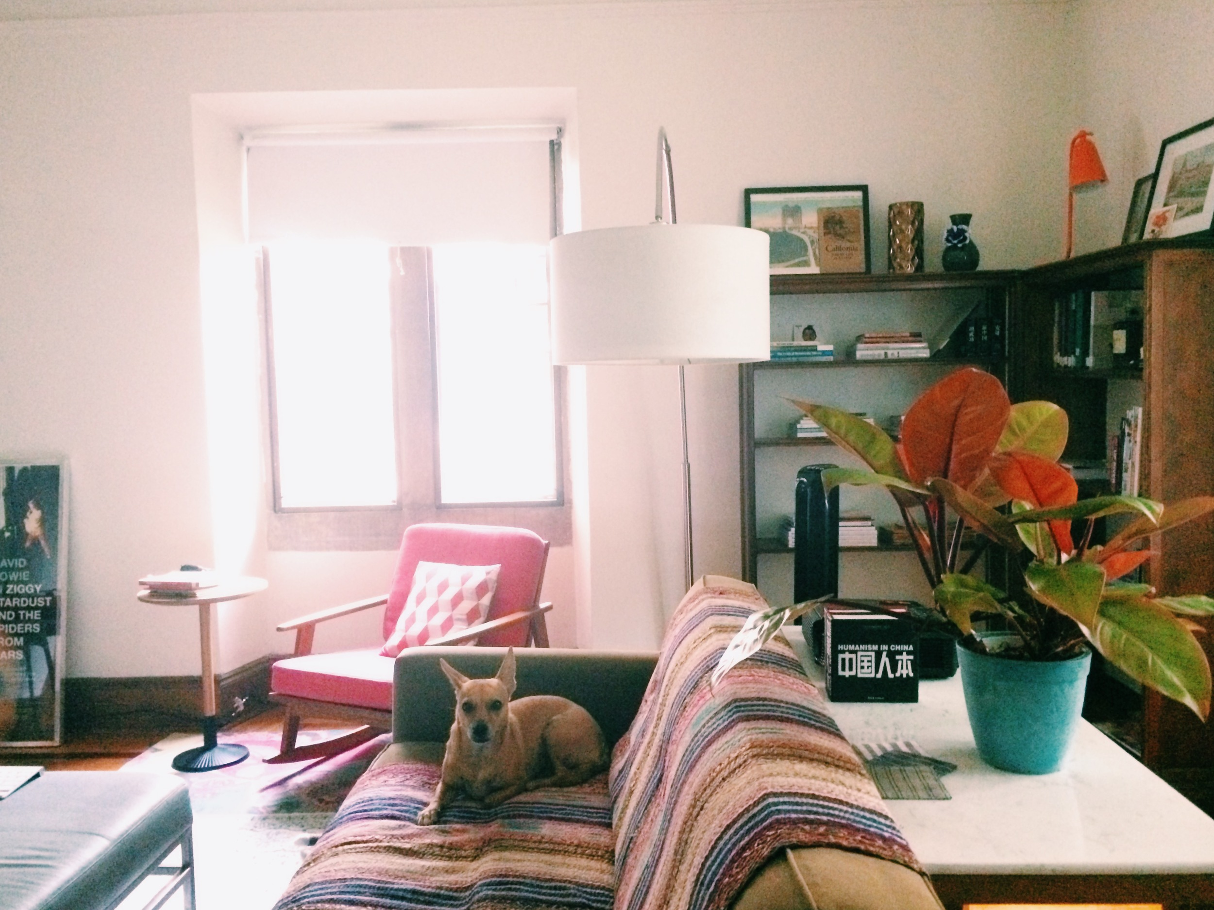willa is sulking because i am taking photos of the apartment instead of romping through the great outdoors with her.