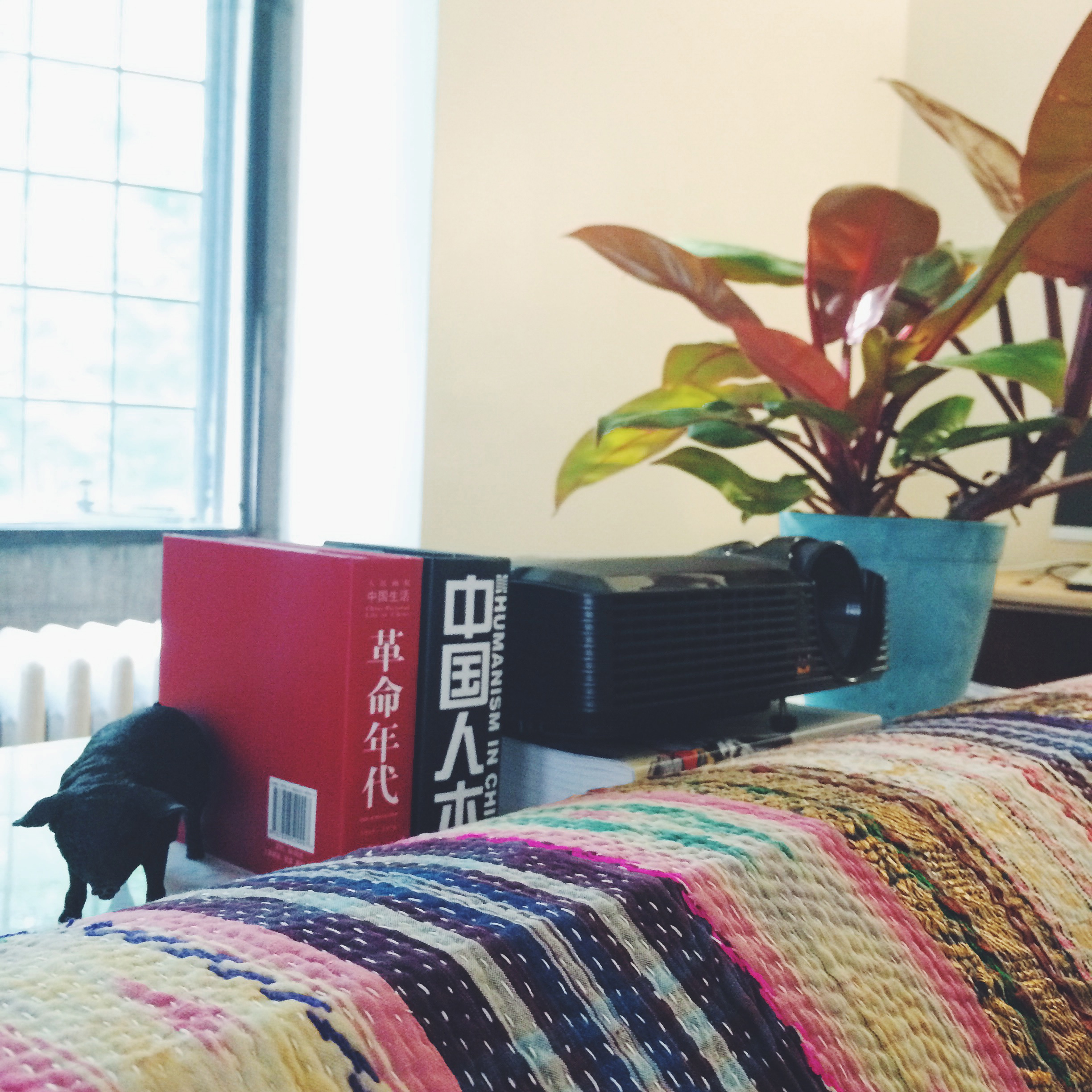 a little black pig, some books, a projector (aka tv!), a philodendron.