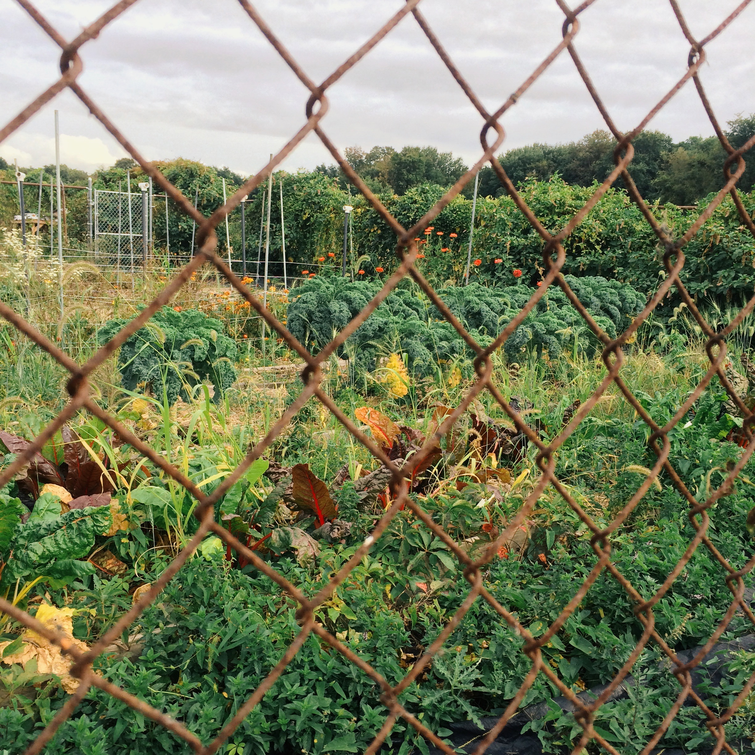 farm-project-fence
