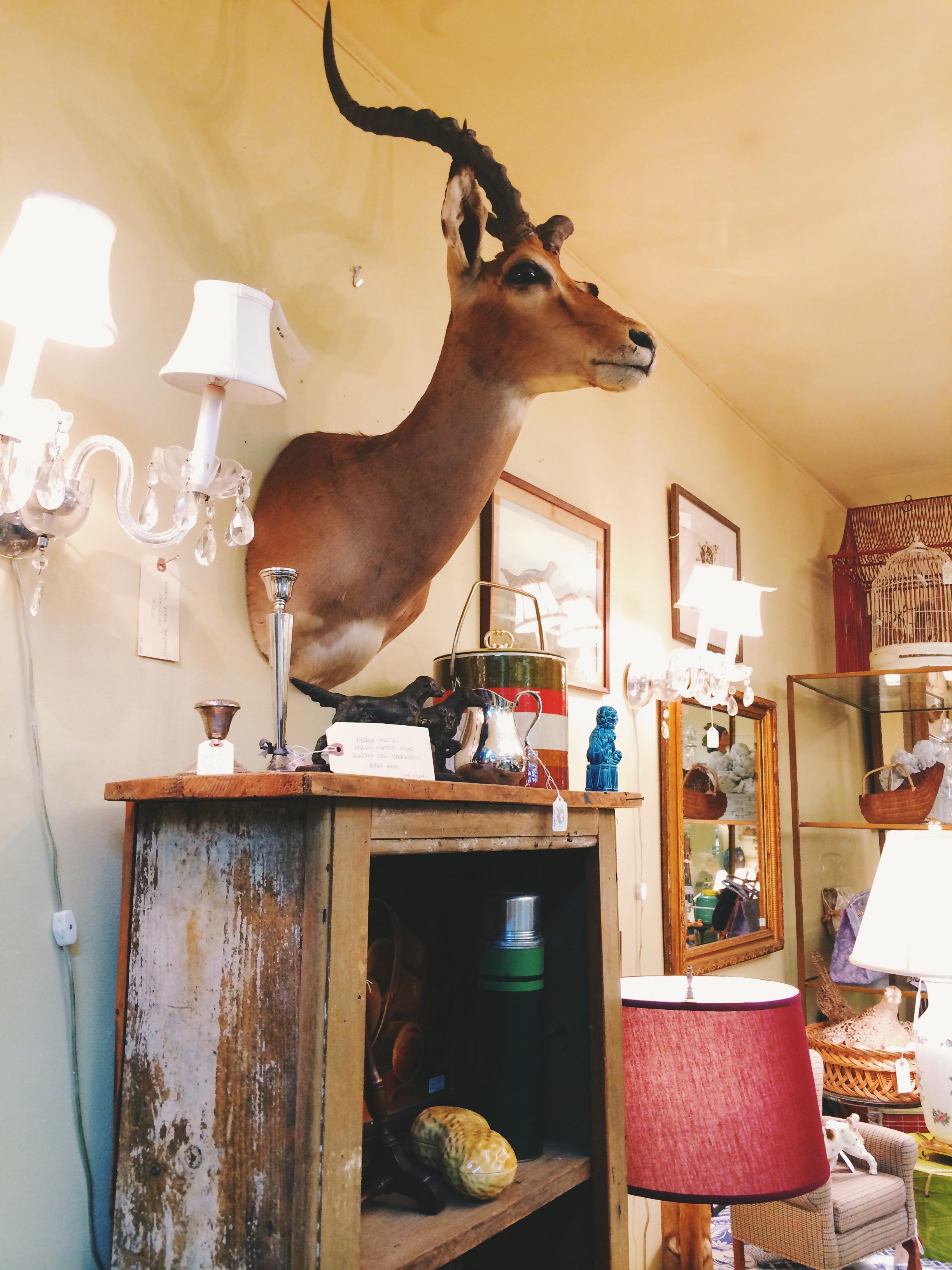 pawling-mounted-deer