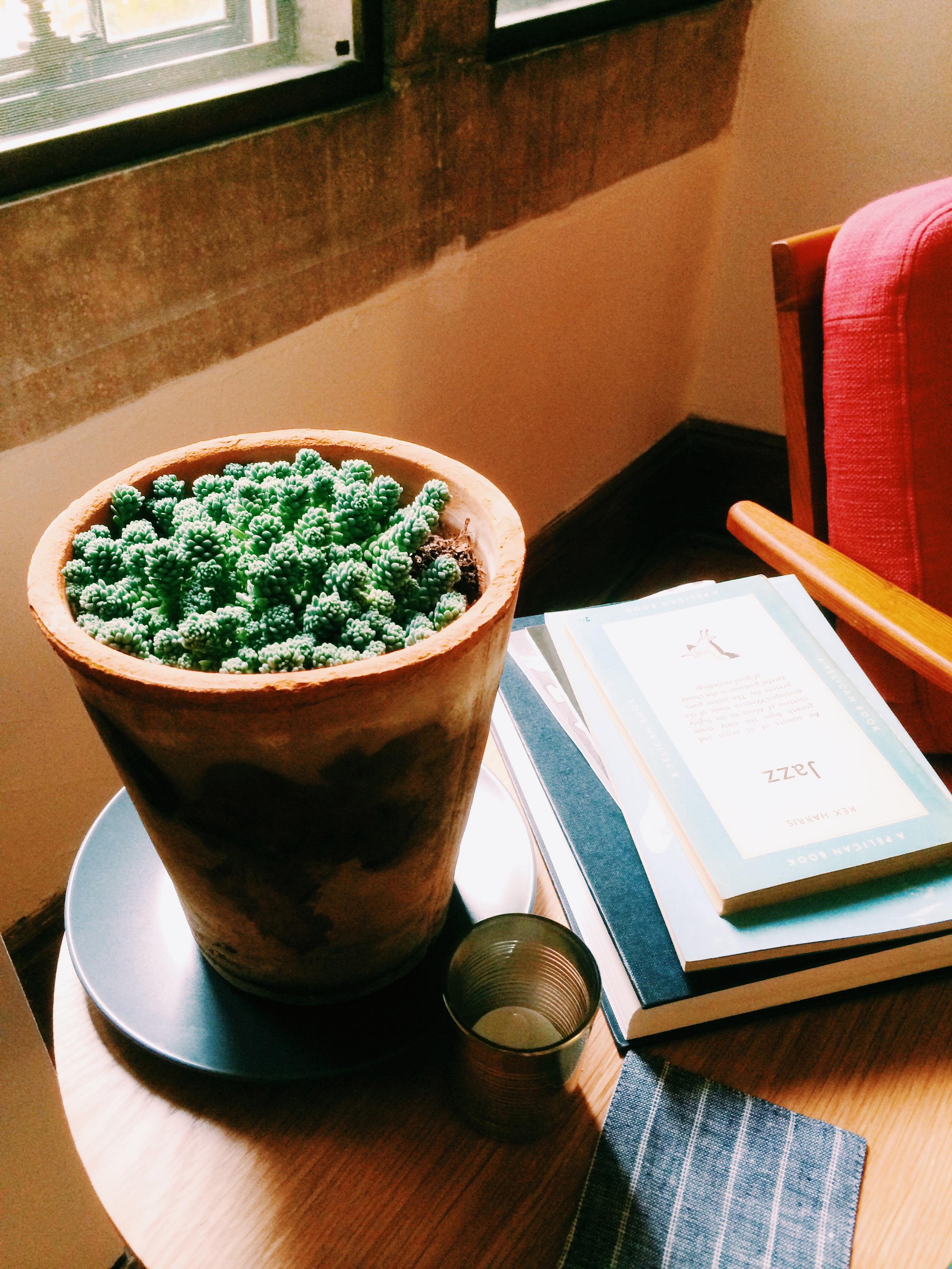 succulent-poughkeepsie