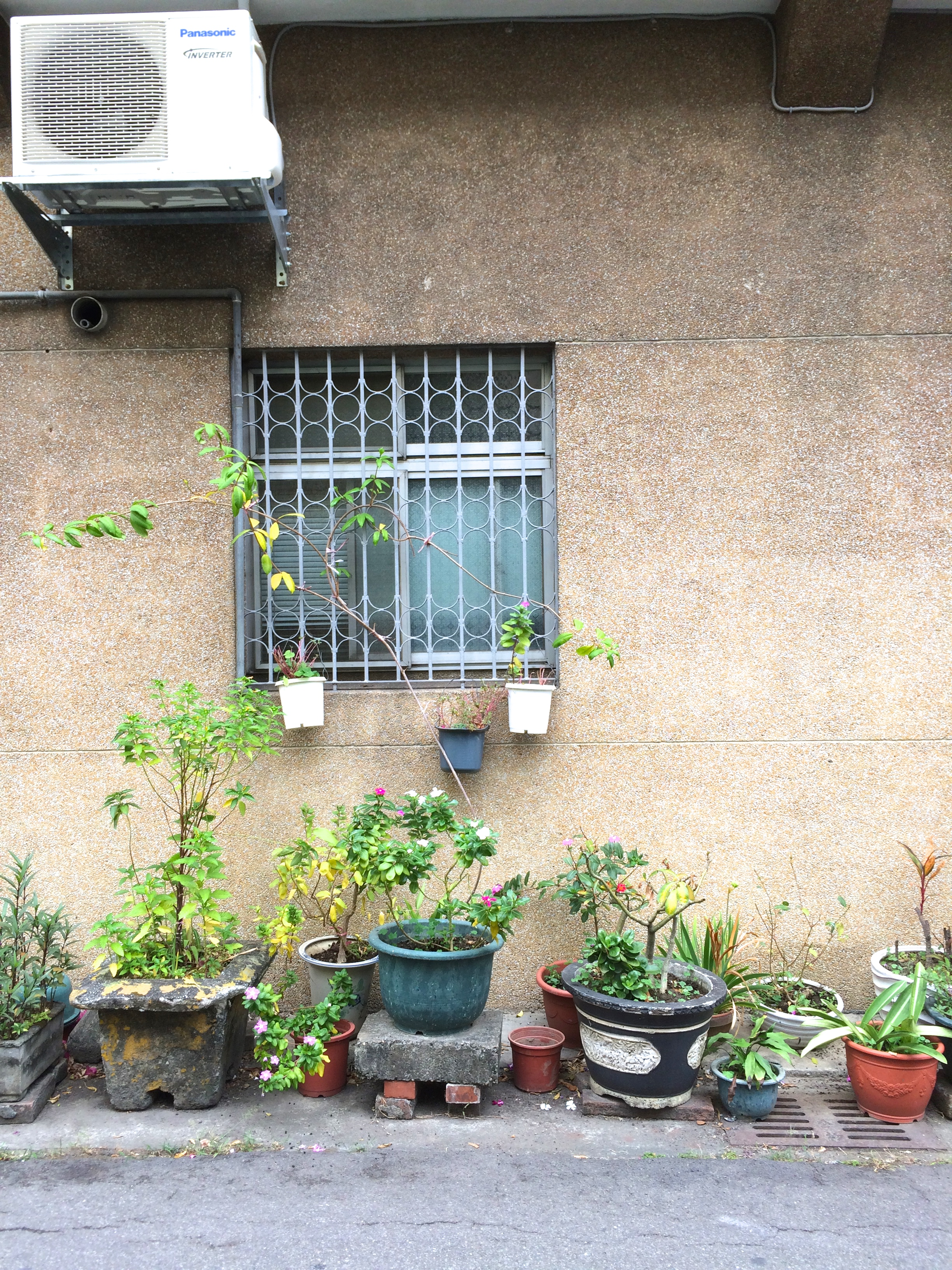 alleyplants2