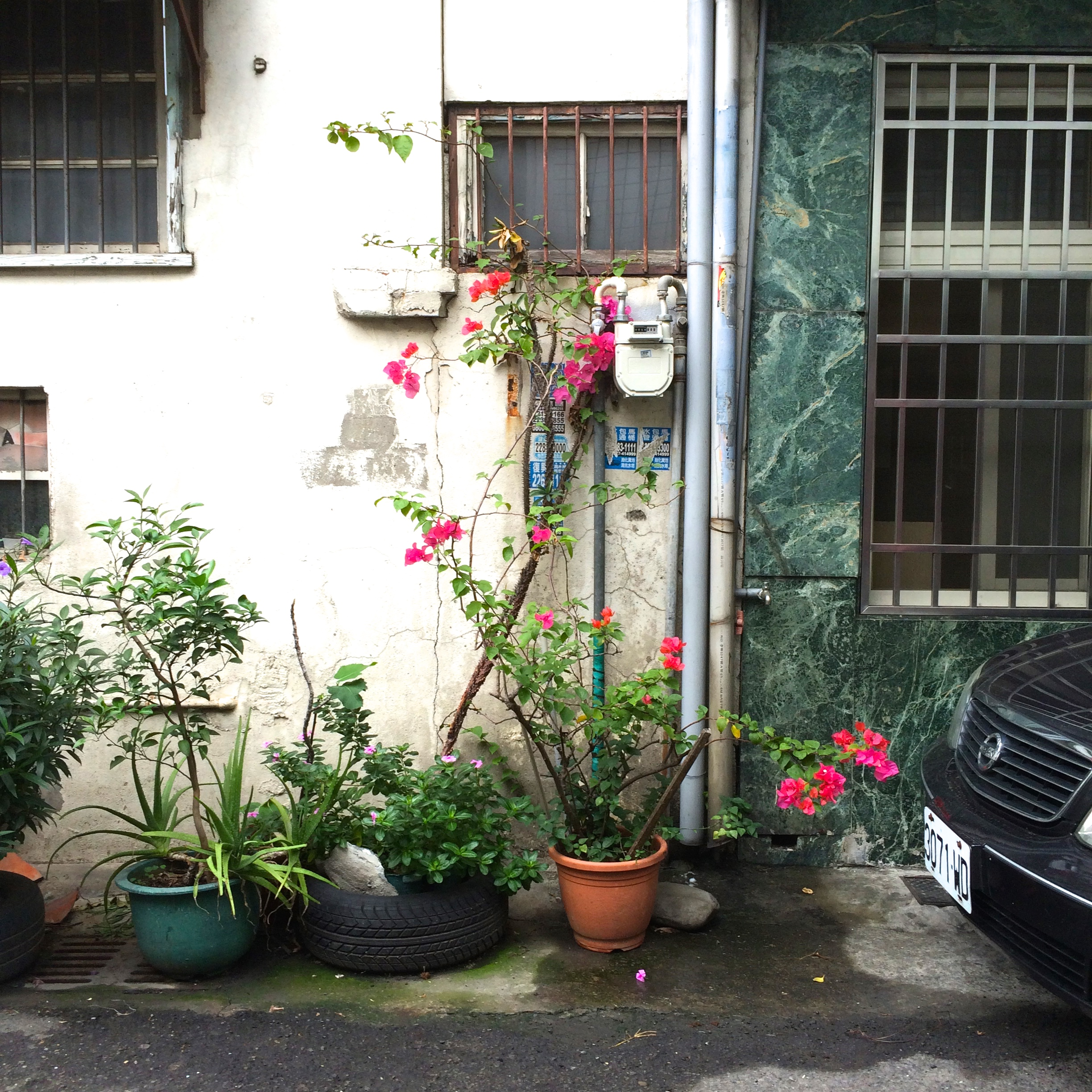 alleyplants3