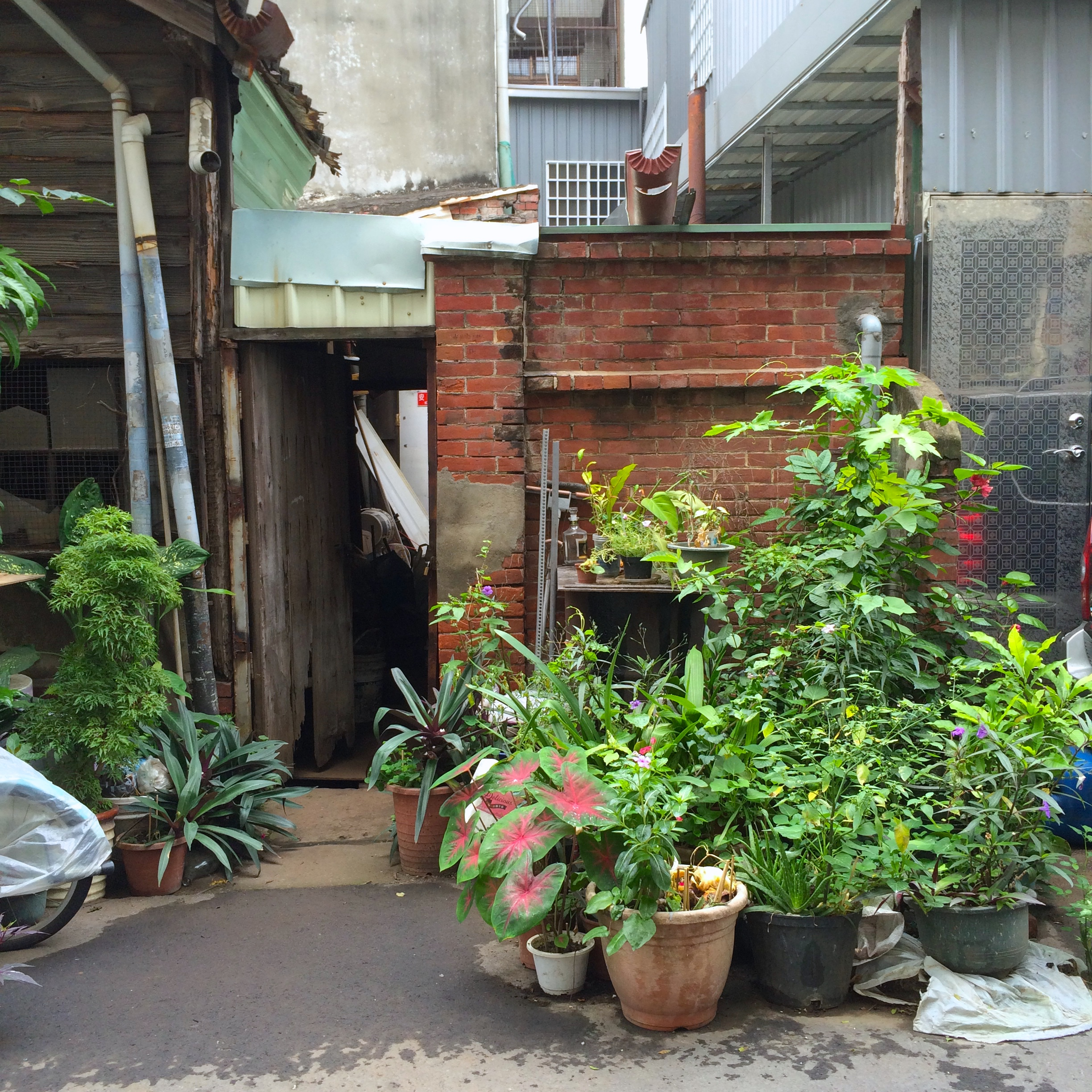 alleyplants4