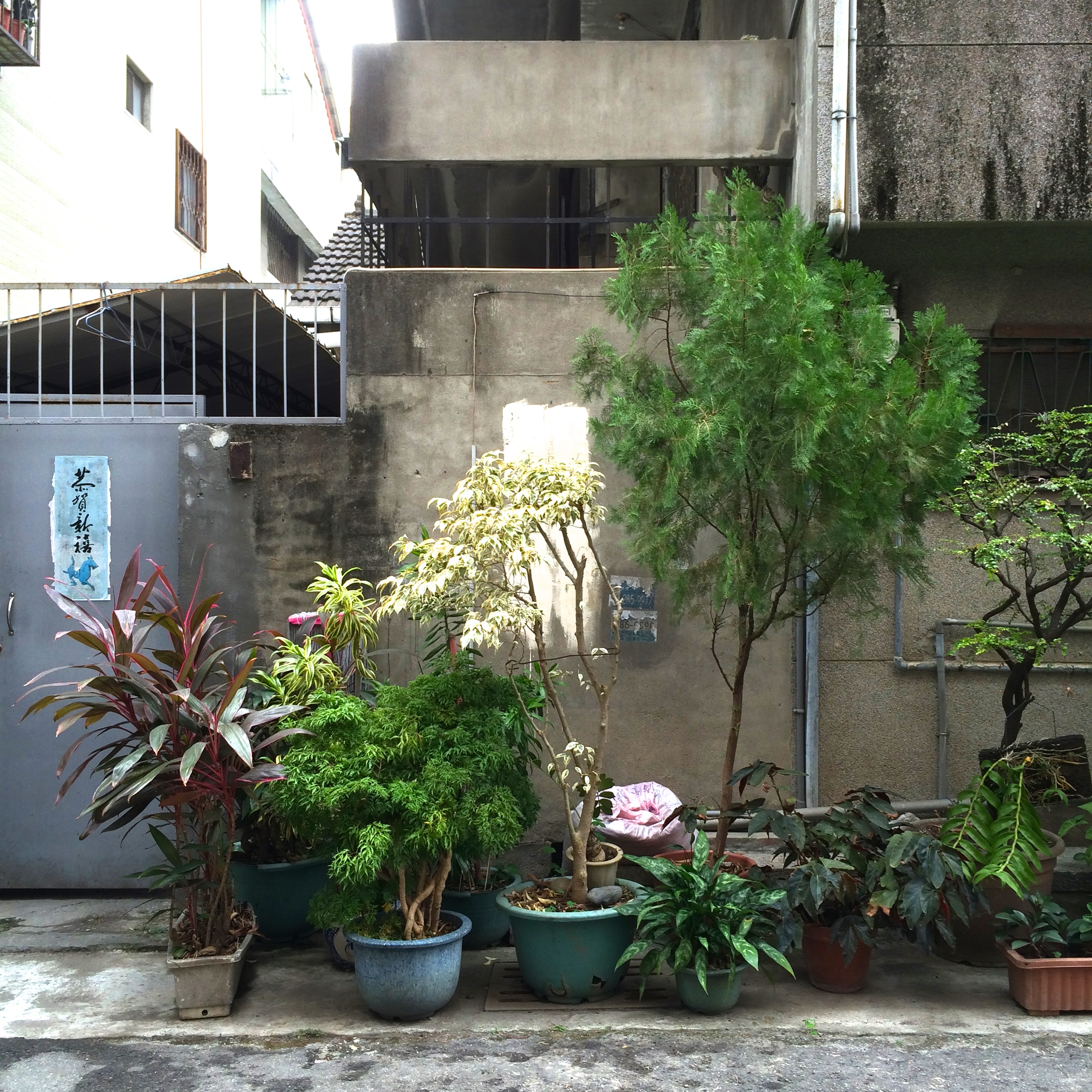 alleyplants6
