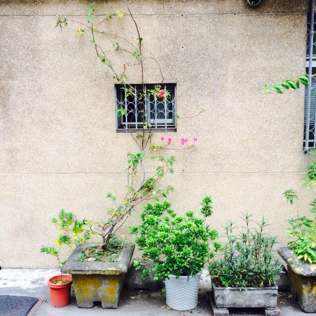alleyplants-instagram