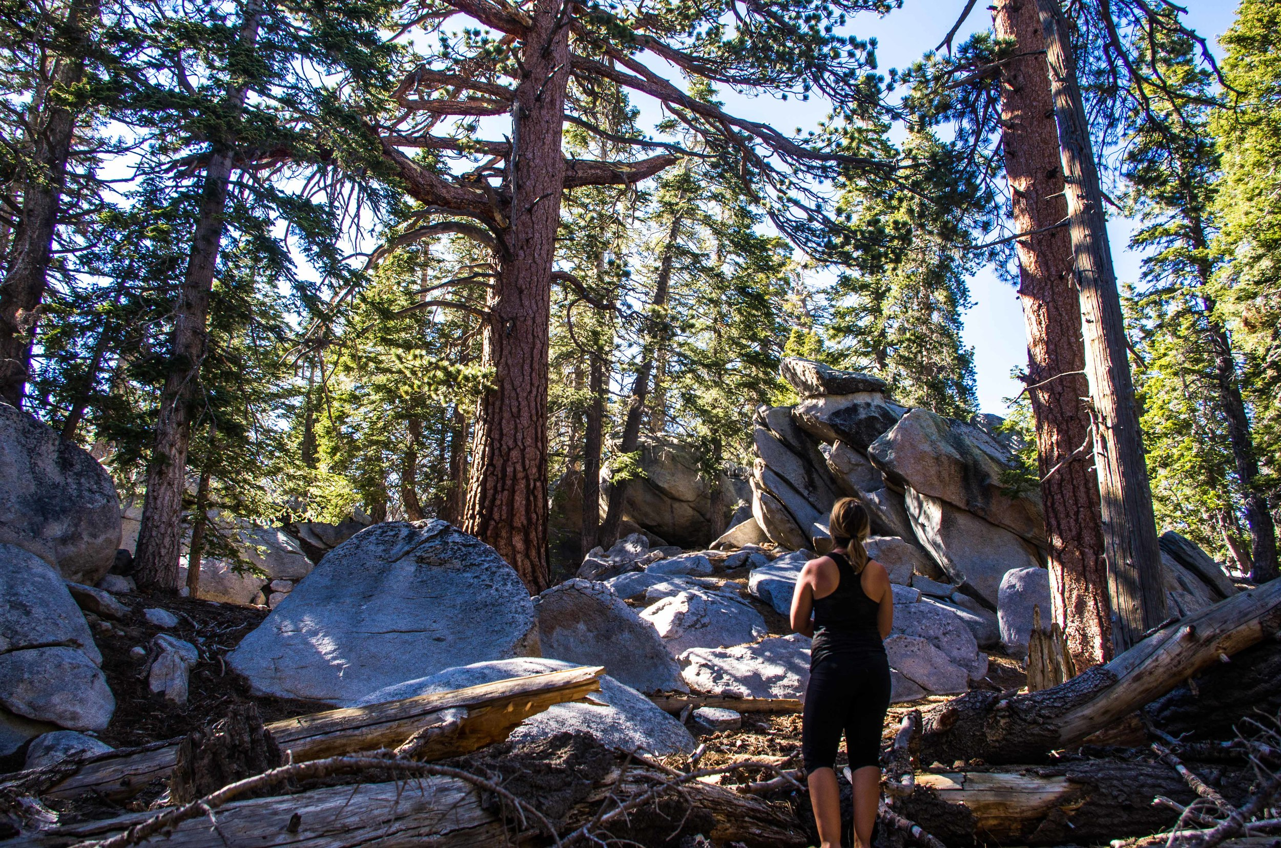 Old growth Jeffrey Pines and piles of granite boulders makes one feel more like they're in Lake Tahoe than Palm Springs. Mount San Jacinto State Park, California
