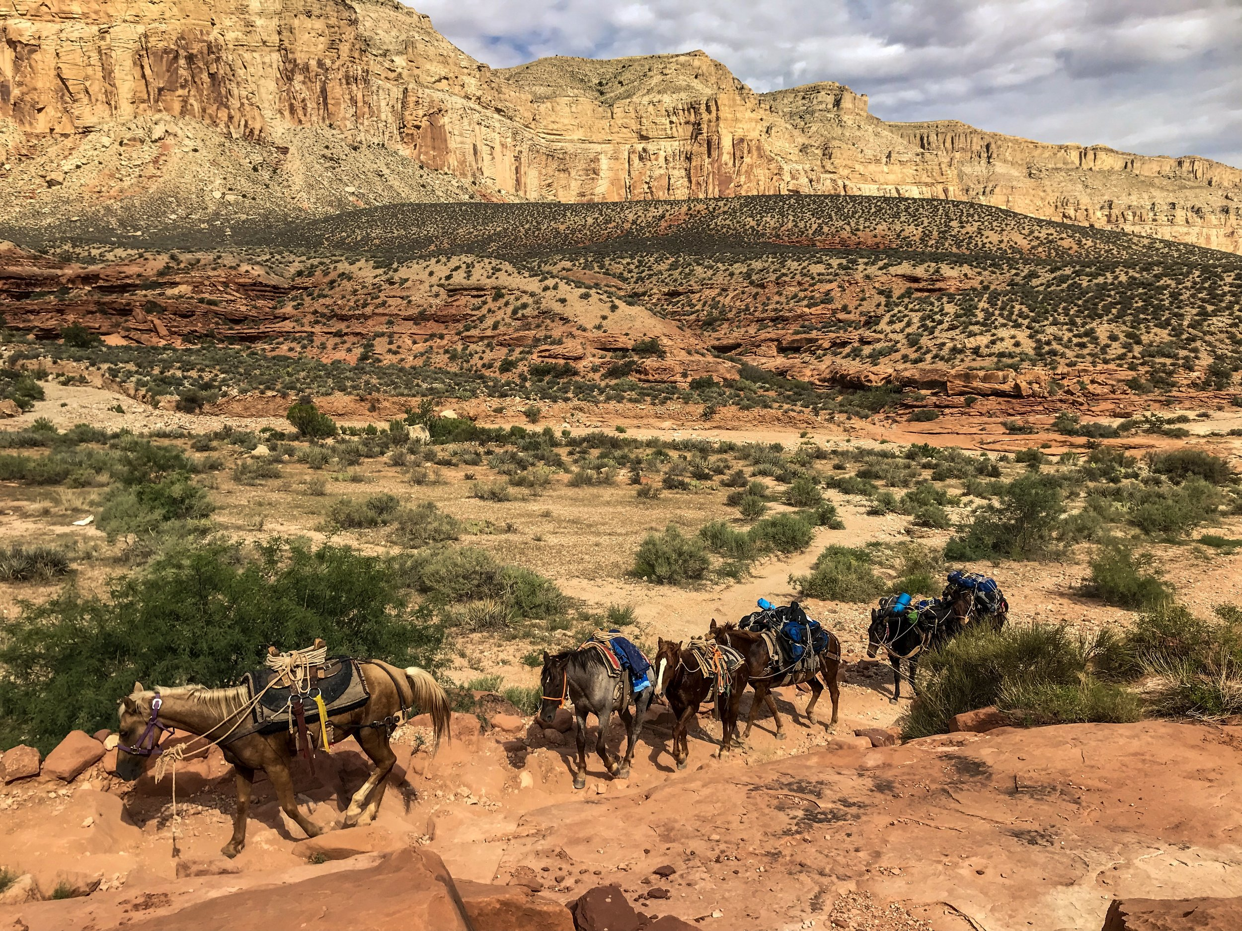 Horses at the base of the switchbacks in Havasu Canyon. Havasupai Indian Reservation