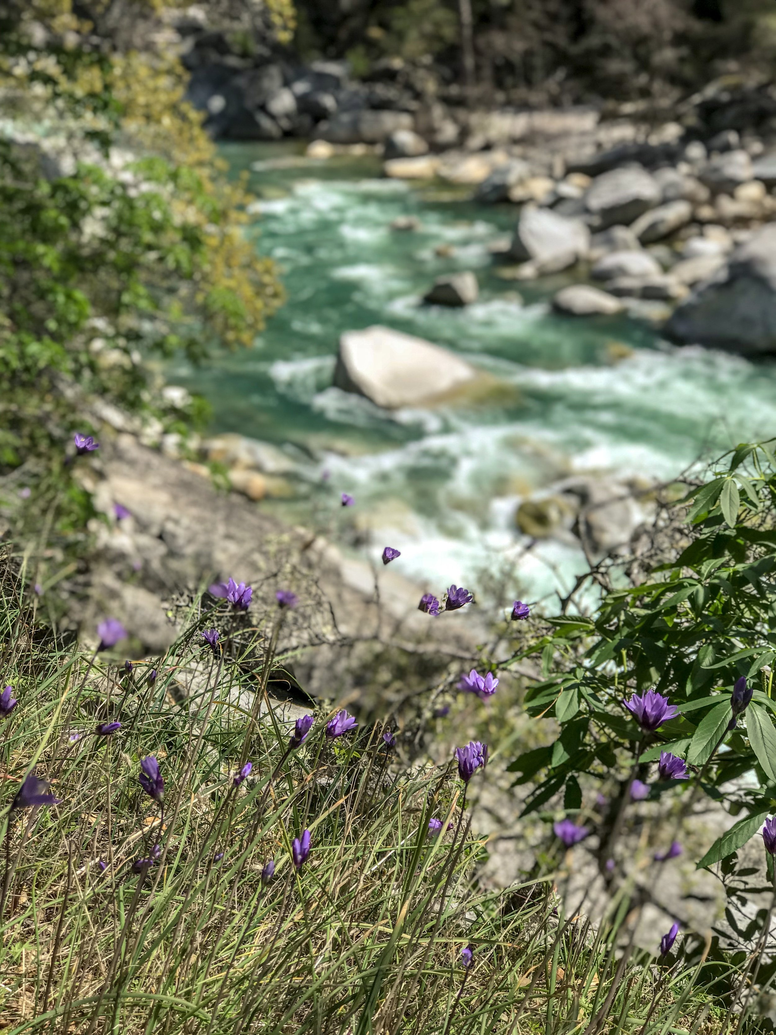 Spring is a great season and doesn't deserve the crap I give it. South Yuba River State Park, California.