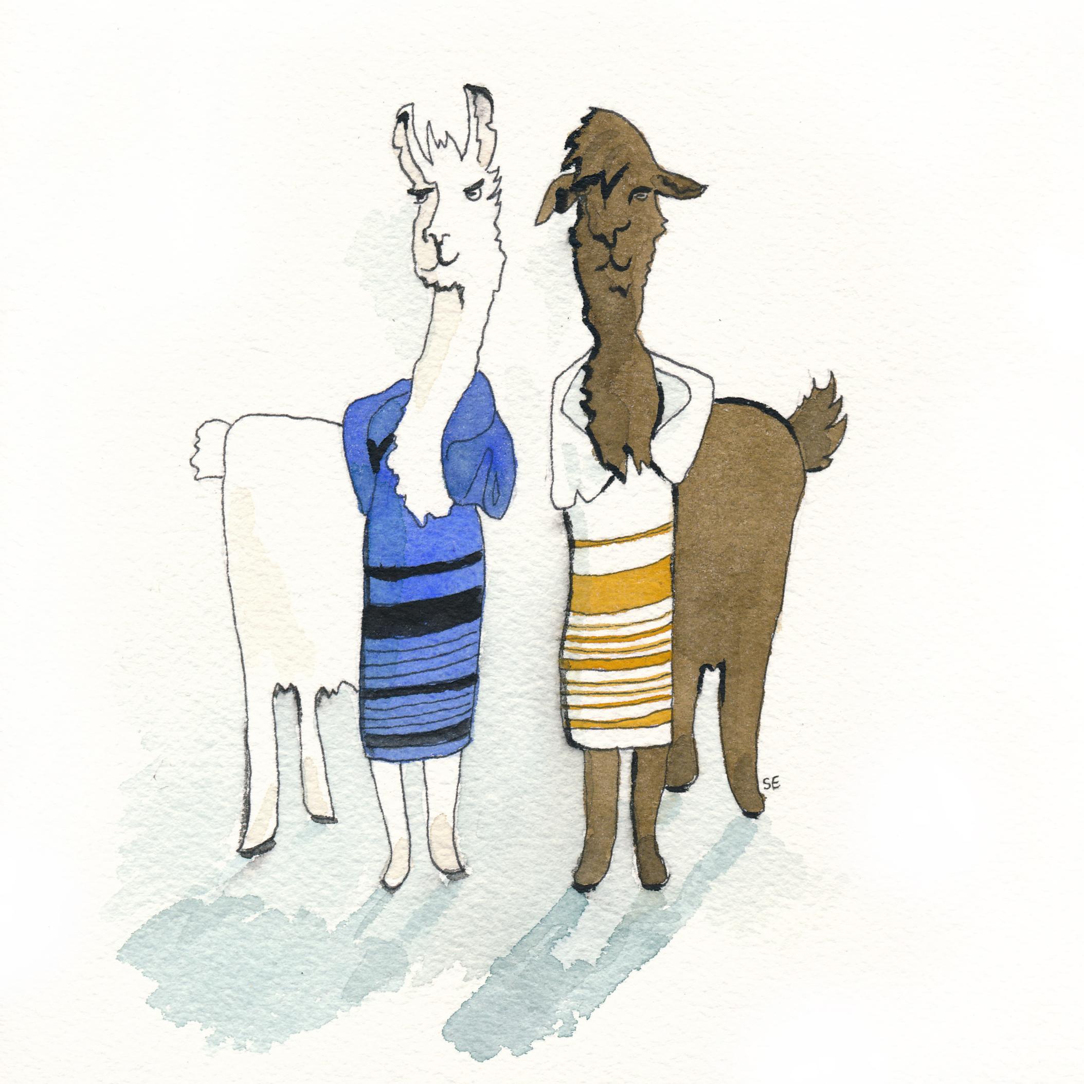 llama dress drama.jpg