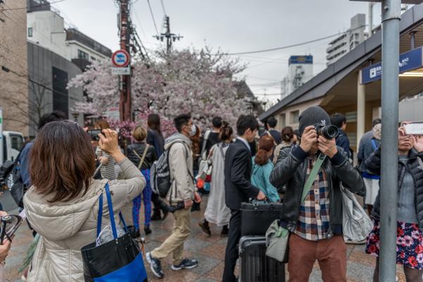 Tourists and Sakura Viewers, Takasegawa