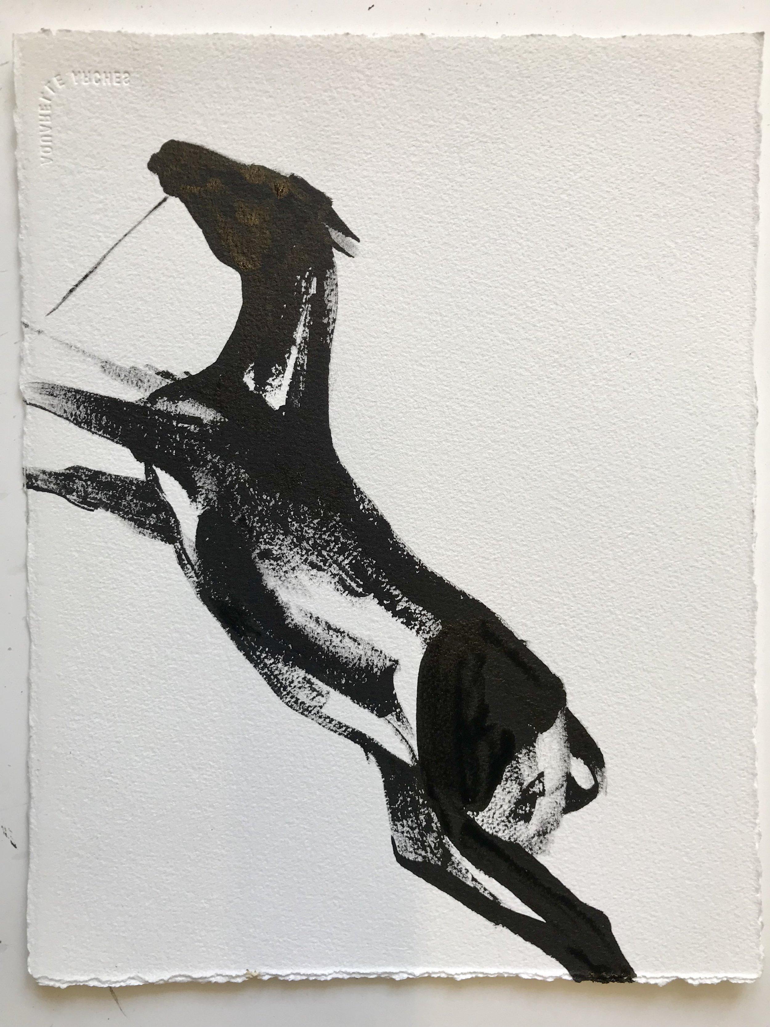 Animal study