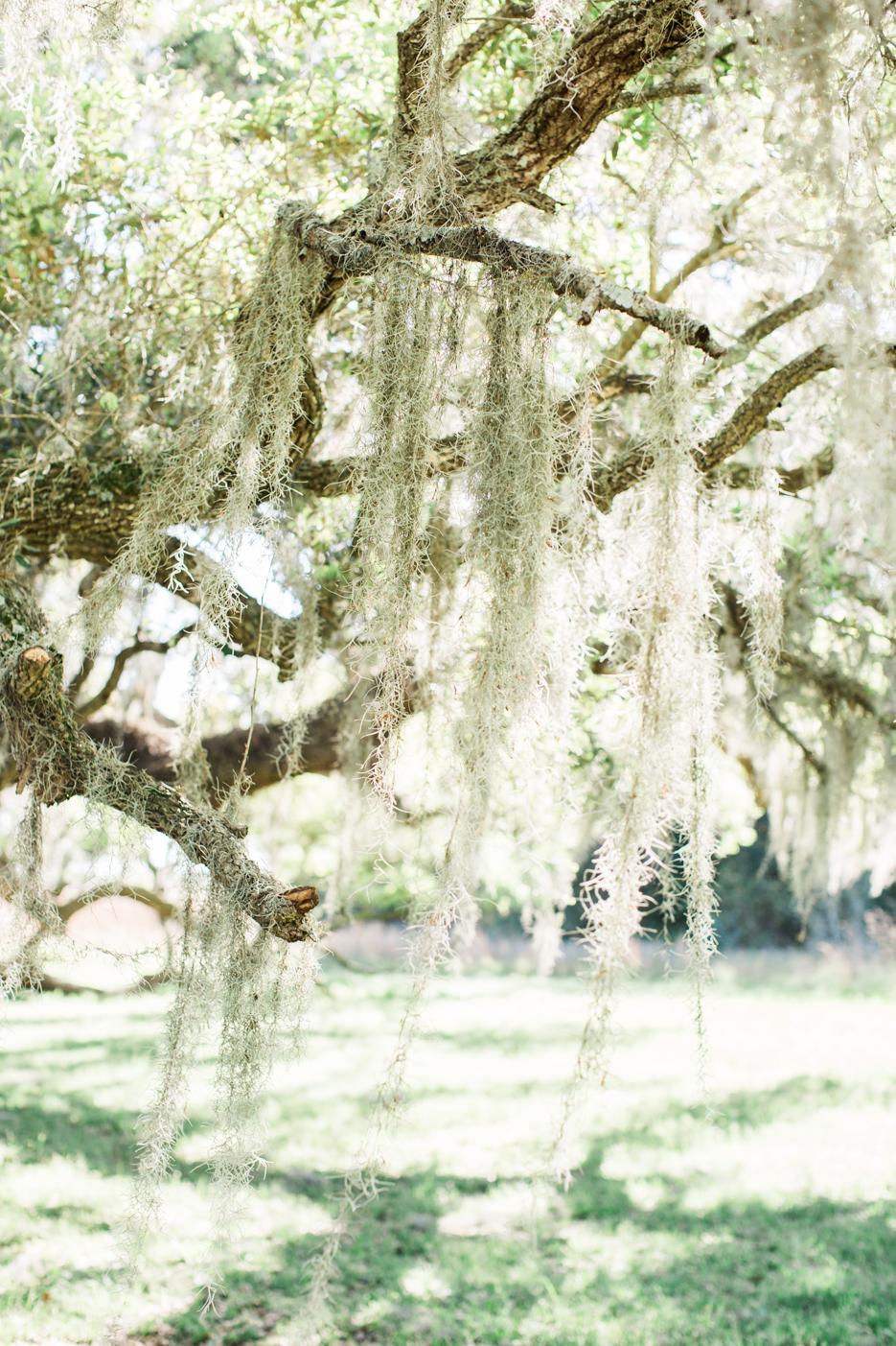 Britt Latz Photography_Joines_Engagement Collection-3.jpg
