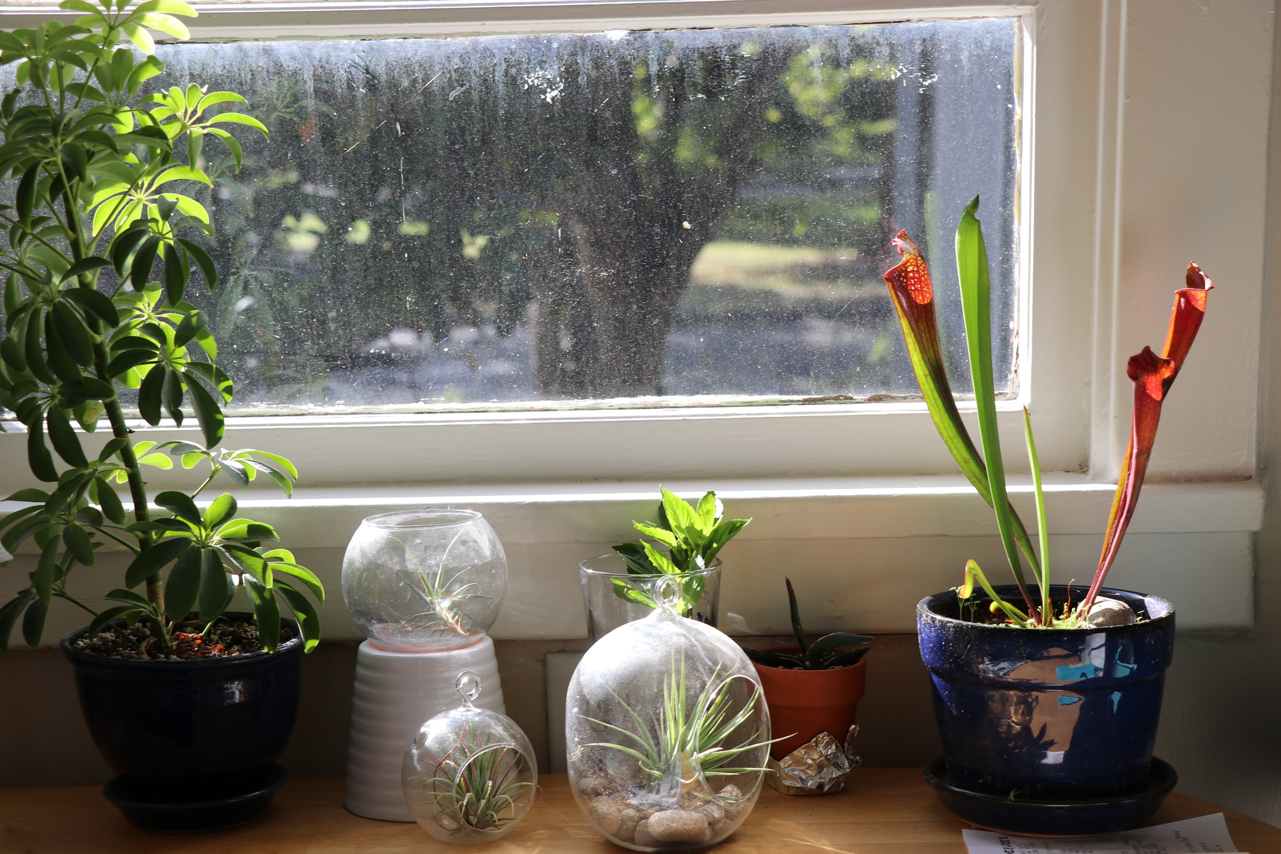 The plants of Seagull House