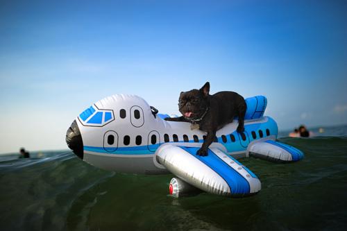 Puppy Shipping.jpg