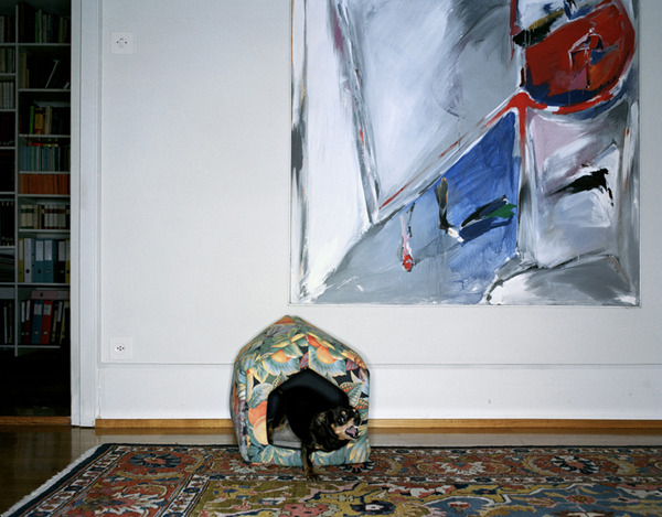 Dog , 2002-2003 Pigment print on heavy rag paper 26 1/2 x 33 3/4 inches, edition of 5