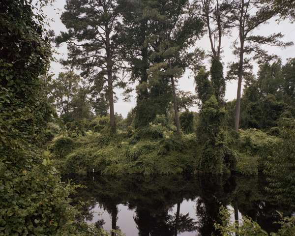 The Great Dismal Swamp, Virginia/North Carolina border, 2009