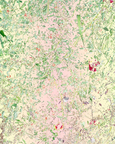 Aaron ROTHMAN  Wildflowers (PVGM3), October , 2015 Archival pigment print 31 1⁄4 x 25 inches  Edition of 3, 1AP