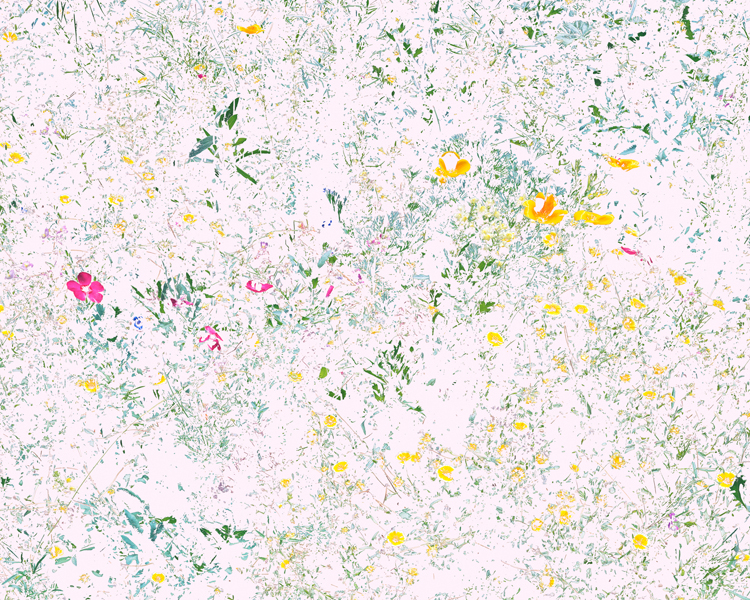 Aaron ROTHMAN  Wildflowers (PVF1), October , 2015 Archival pigment print 22 x 27 1⁄2 inches  Edition of 3, 1AP