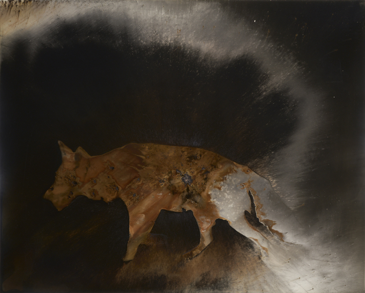 Coyote #1 , 2016 Unique gunpowder generated gelatin silver print 16 x 20 inches