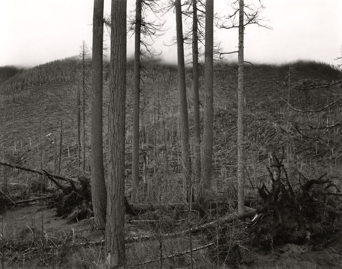 Emmet Gowin  Ryan Lake Area, Mt. St Helens,  1981 Toned gelatin silver print 7 5/8 x 9 7/8 inches