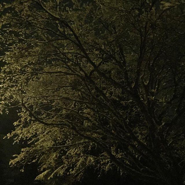 Good Night green tree