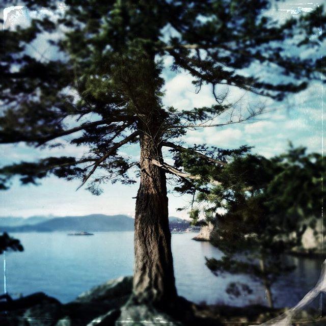 Jack Pine Point #lighthousepark #westvancouver #sunday #oceanview #landscape #vancouver #canada