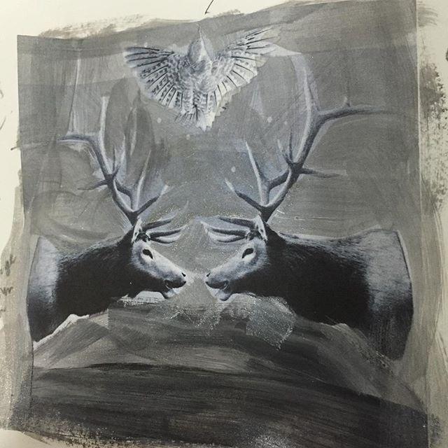 Opening old sketch books #deer #stags #faceoff #blackandwhite #heatherjohnstonphotography #4oceansart #canadianartist