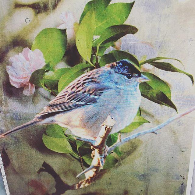 Spring is just around the corner #dancing #birdsong #spring #flowers #print