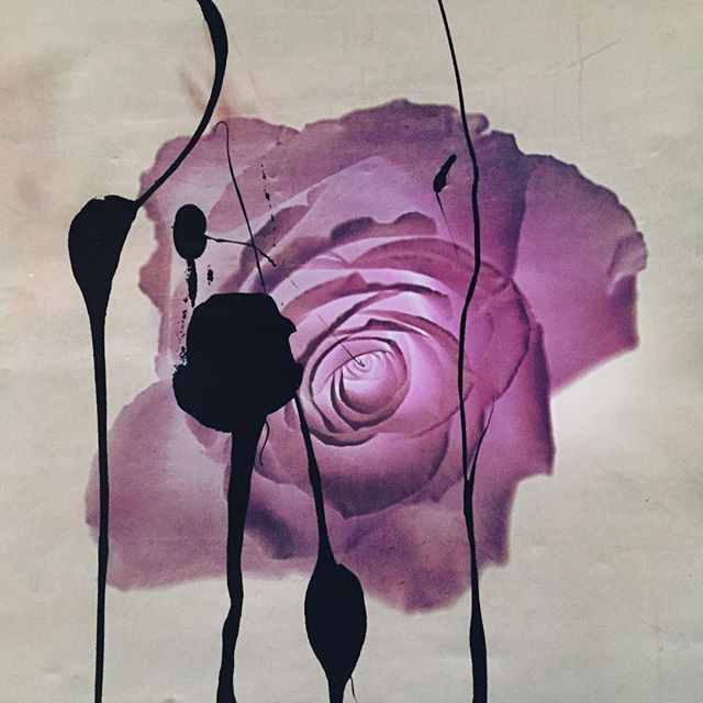 """""""Do not watch the petals fall from the rose with sadness, know that, like life, things sometimes must fade, before they can bloom again"""""""