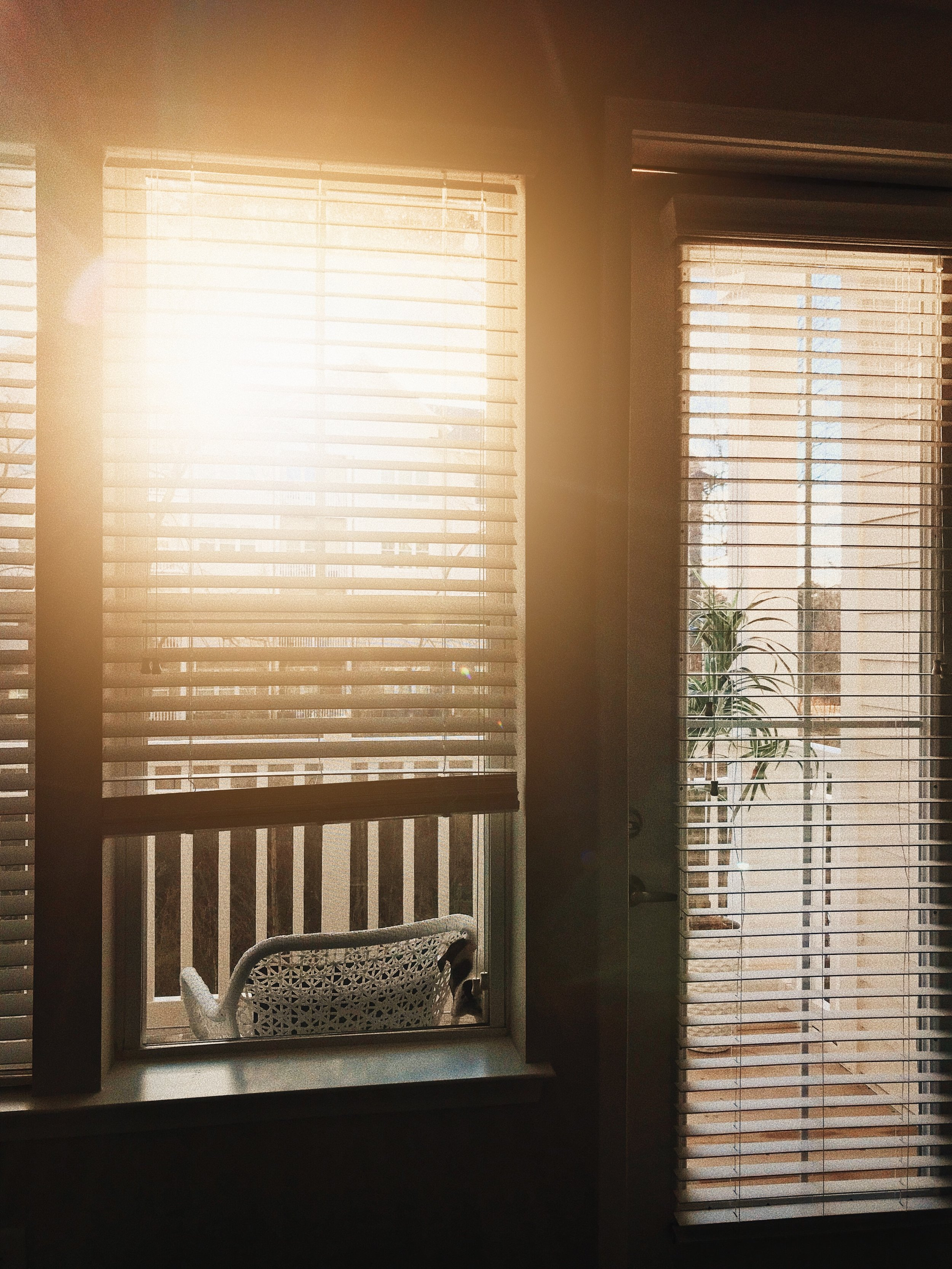 Dixie Looking Into Window