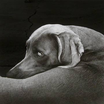 Looking Back, William Wegman