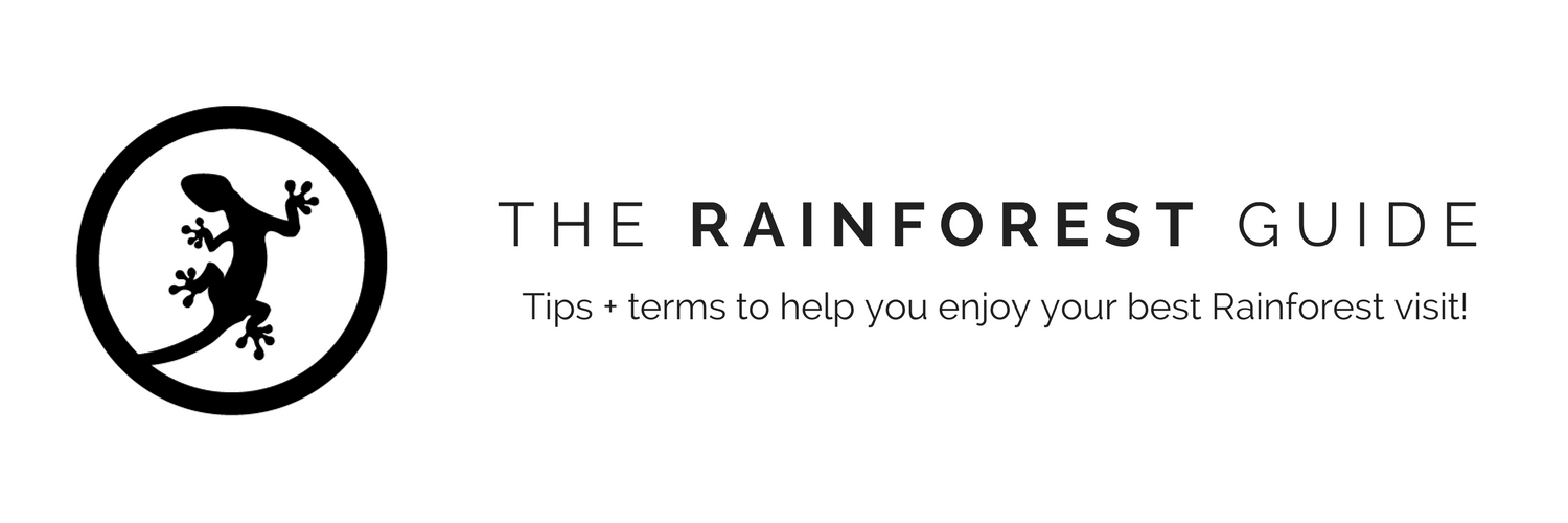 The Rainforest Guide