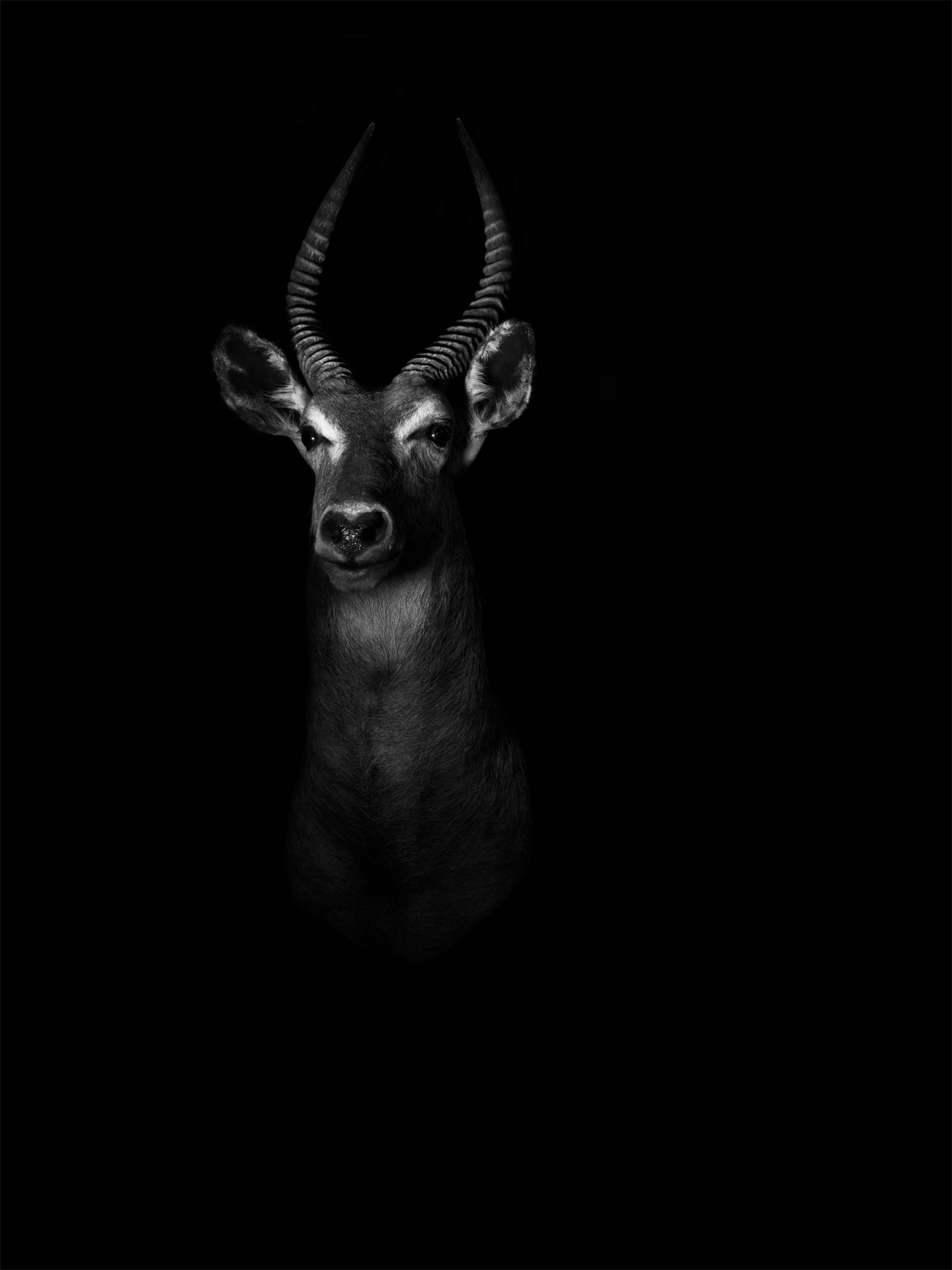 waterbuck copy.jpg